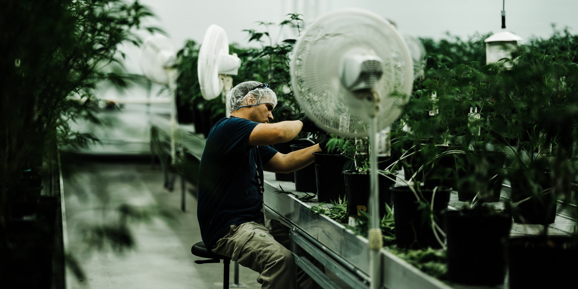 Canada Isn't Licensing Cannabis Cultivation Sites Fast Enough To Meet Demand