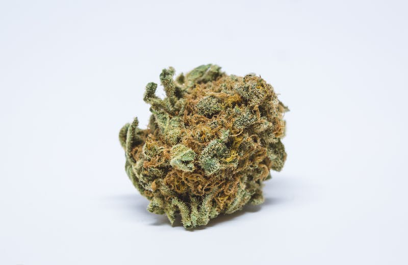 Cherry Pie The Strongest Strains on the Planet