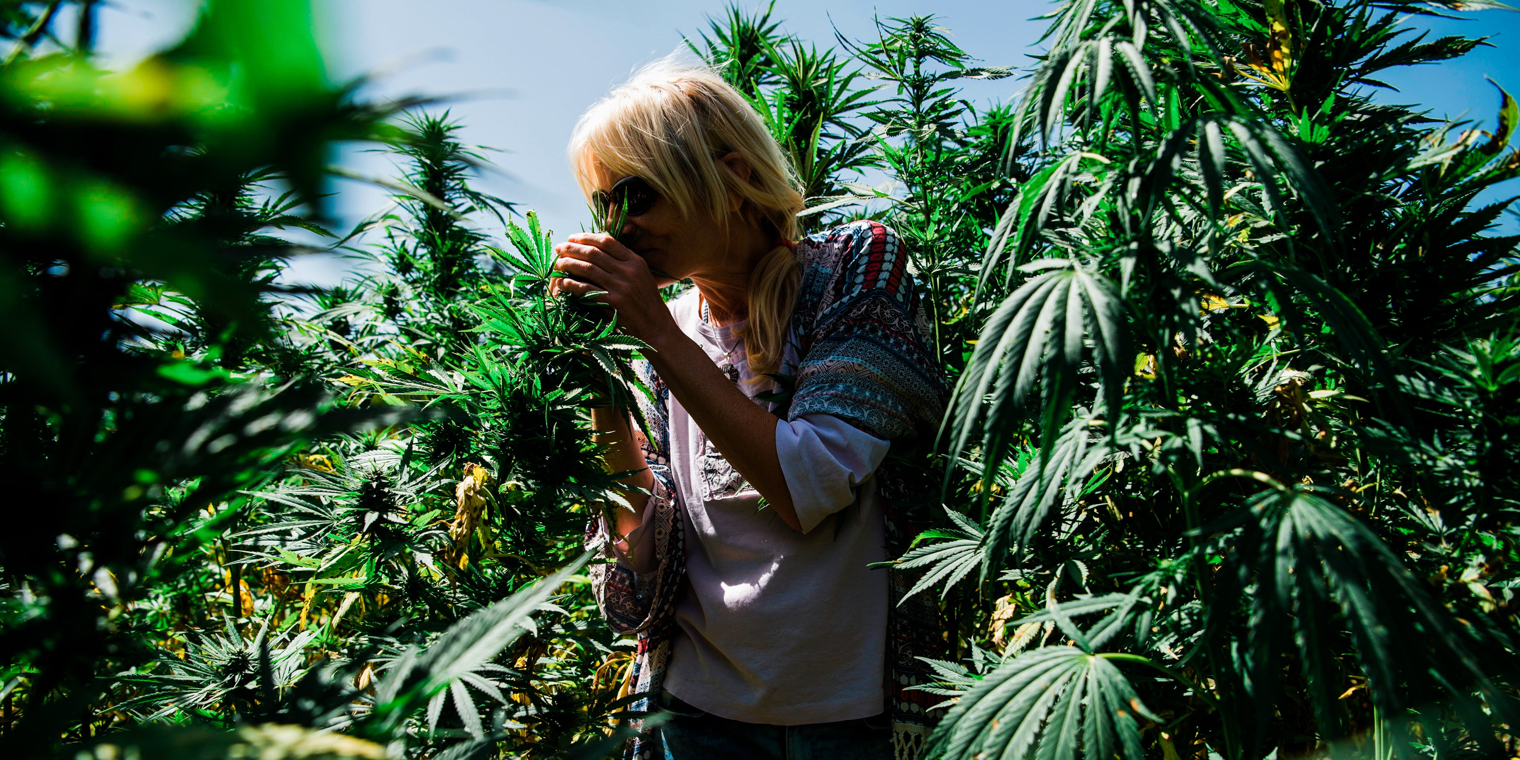 Humbolt County Cannabis Farmer tends to her grow operation