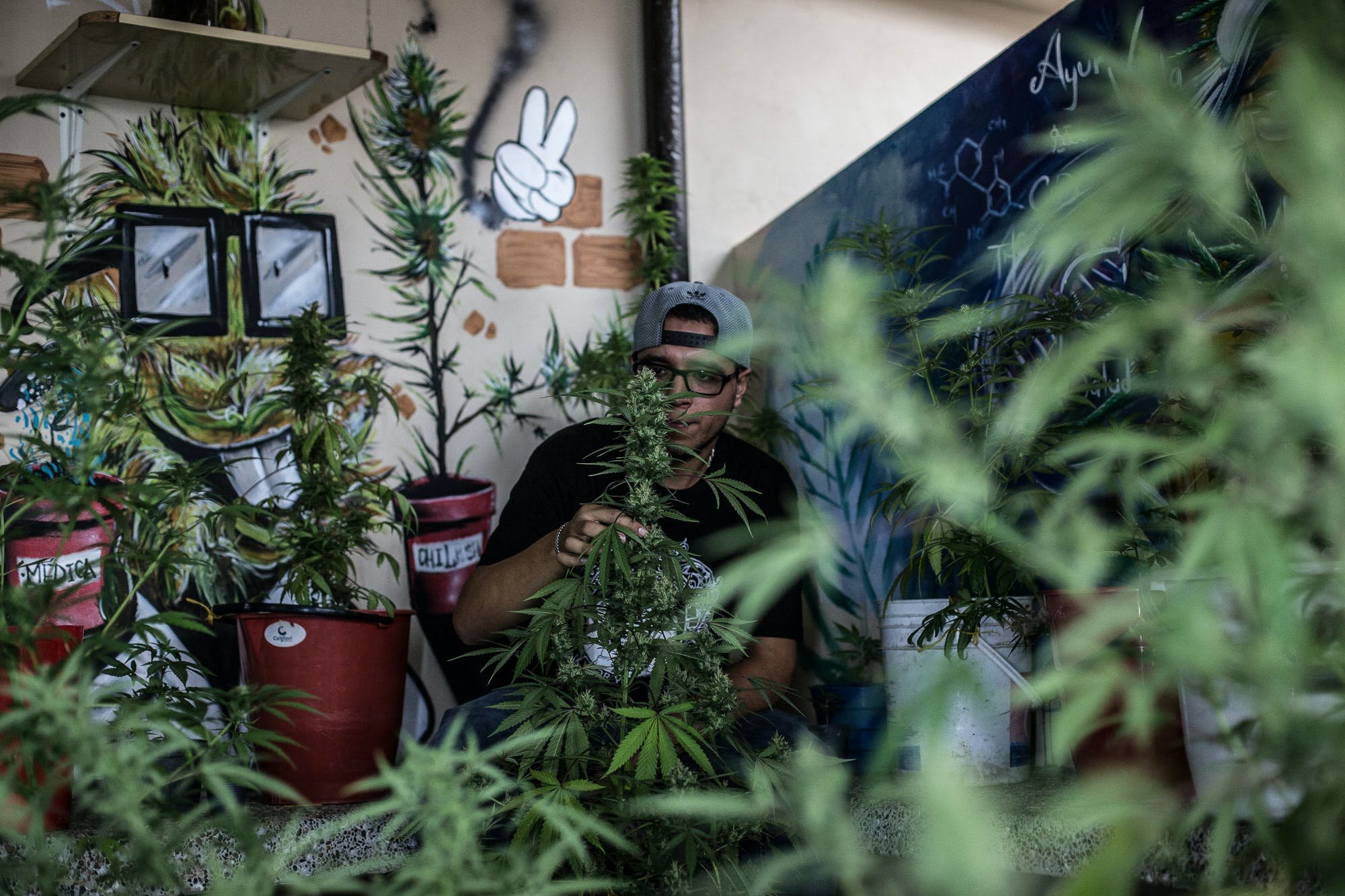 Marijuana Grows Medelli%CC%81n Colombia Photo Essay 1 Inside Colombias Hidden Home Grows