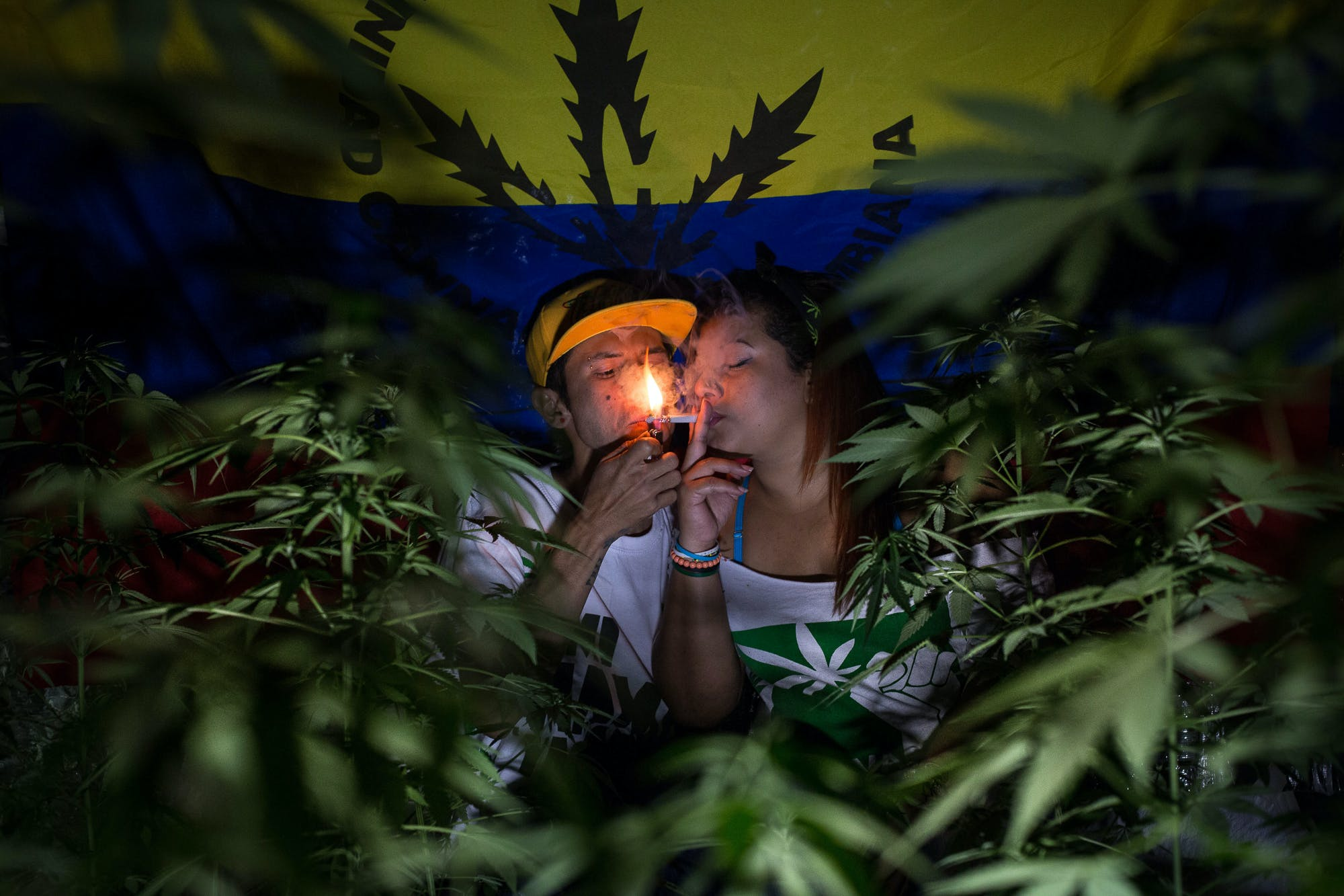 Marijuana Grows Medelli%CC%81n Colombia Photo Essay 9 Inside Colombias Hidden Home Grows