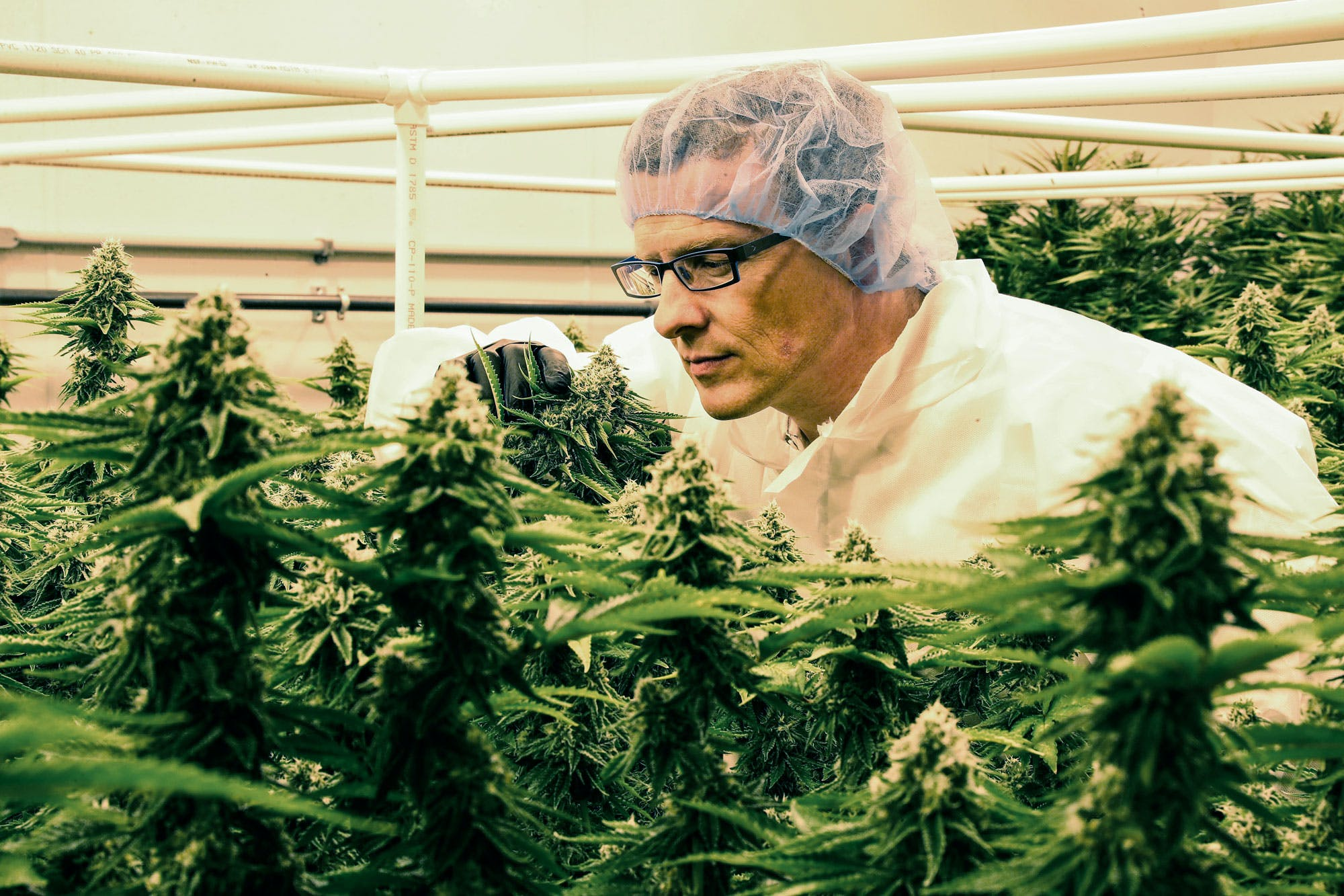 Massachusetts AG allows recreational bans to continue This Is How California Is Destroying $350 Million Worth Of Weed