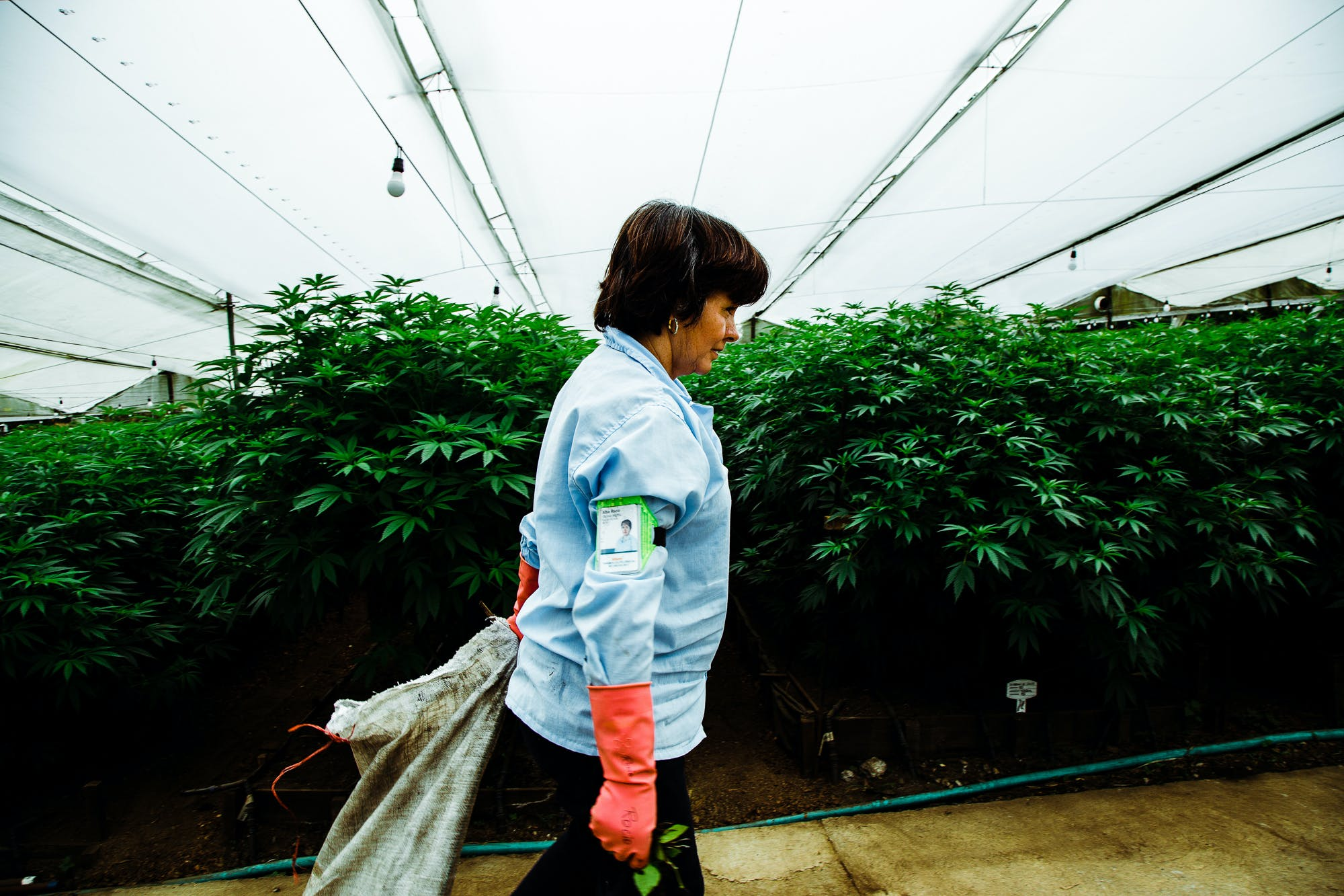 Pharmacielo could become a leader in the global medical cannabis market 8 Cannabis is Legal in Vermont, But Gifting it Isnt
