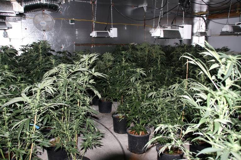 Police Raid 6 Grow Houses Seize 2500 Plants In Washington State This Is How California Is Destroying $350 Million Worth Of Weed