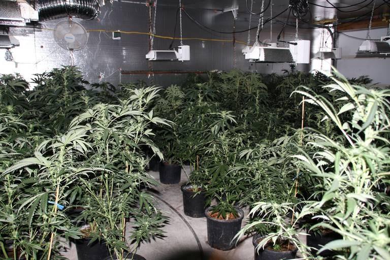 Police Raid 6 Grow Houses, Seize 2,500 Plants In Washington State | Herb