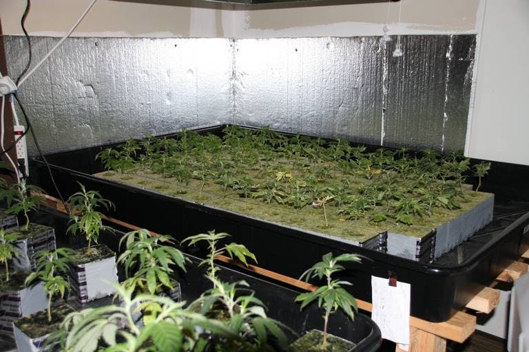 Police Raid 6 Grow Houses Seize 2500 Plants In Washington State2 This Is How California Is Destroying $350 Million Worth Of Weed