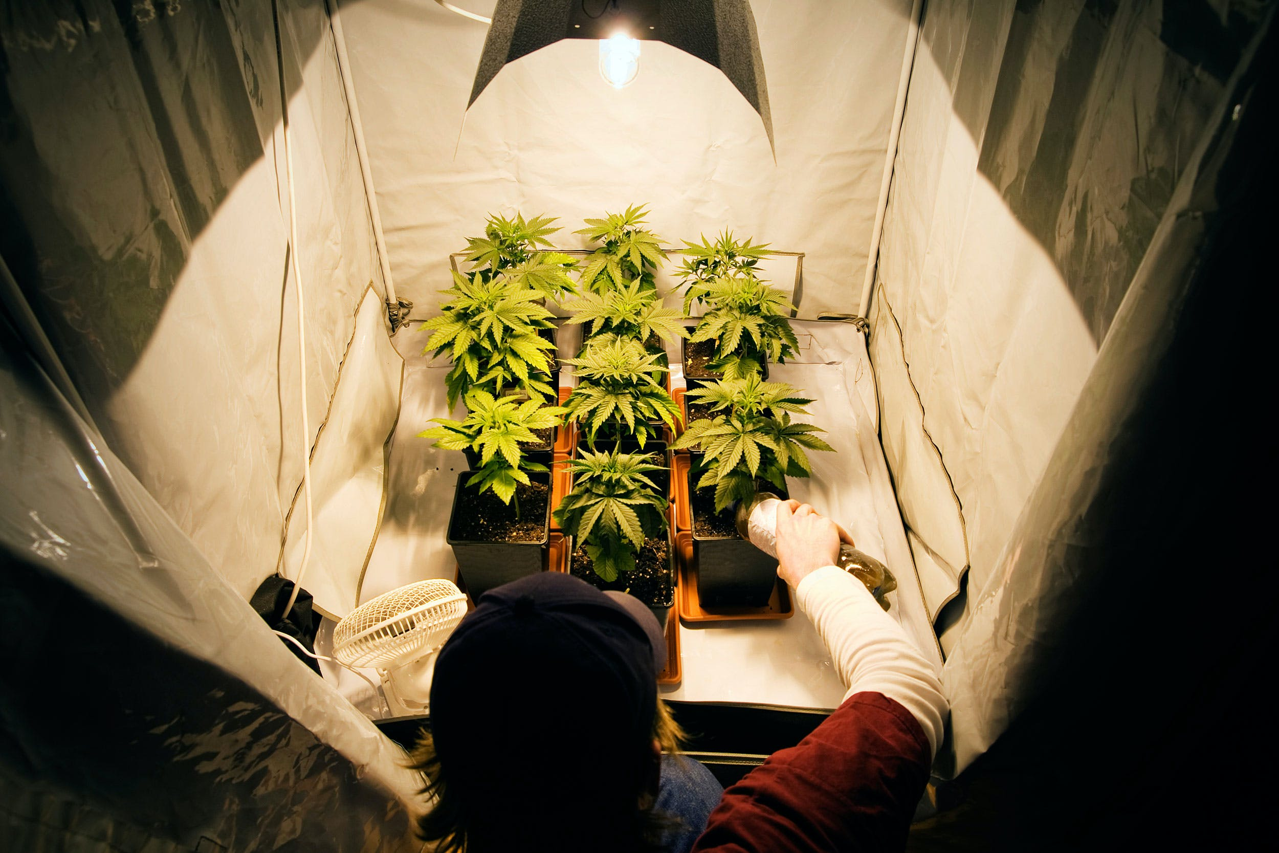 uncropped House rejects 13 amendments including home grow ban California Considers Licensing Its Own Banks For The Cannabis Industry