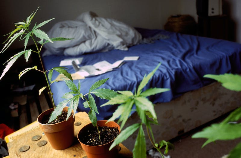 1 Inside the Debate Over Whether Home Growing Should Be Legal Inside the Debate Over Whether Home Growing Should Be Legal