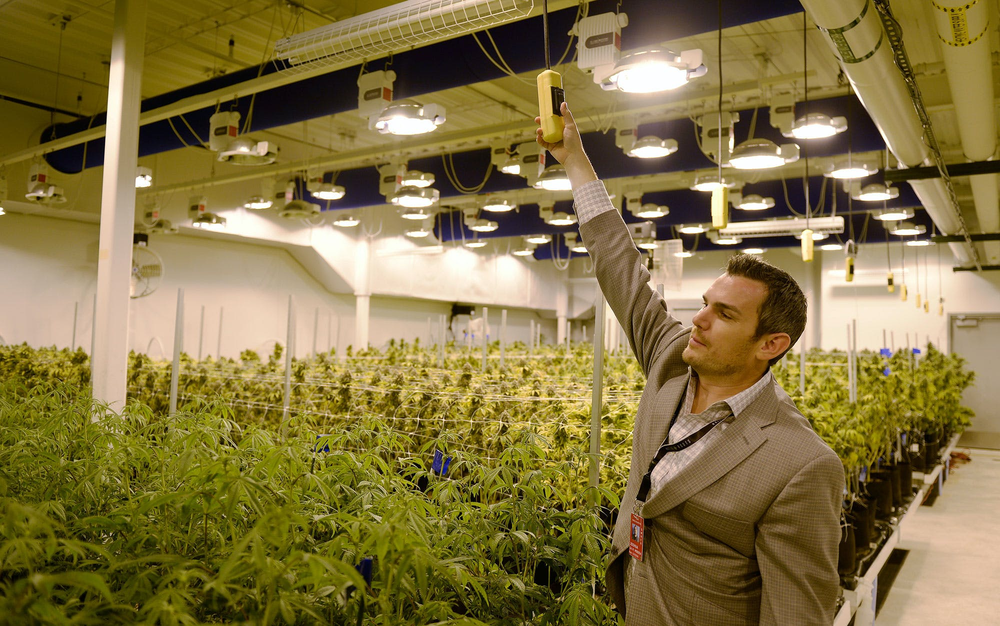 2 Inside the Debate Over Whether Home Growing Should Be Legal This Is How California Is Destroying $350 Million Worth Of Weed