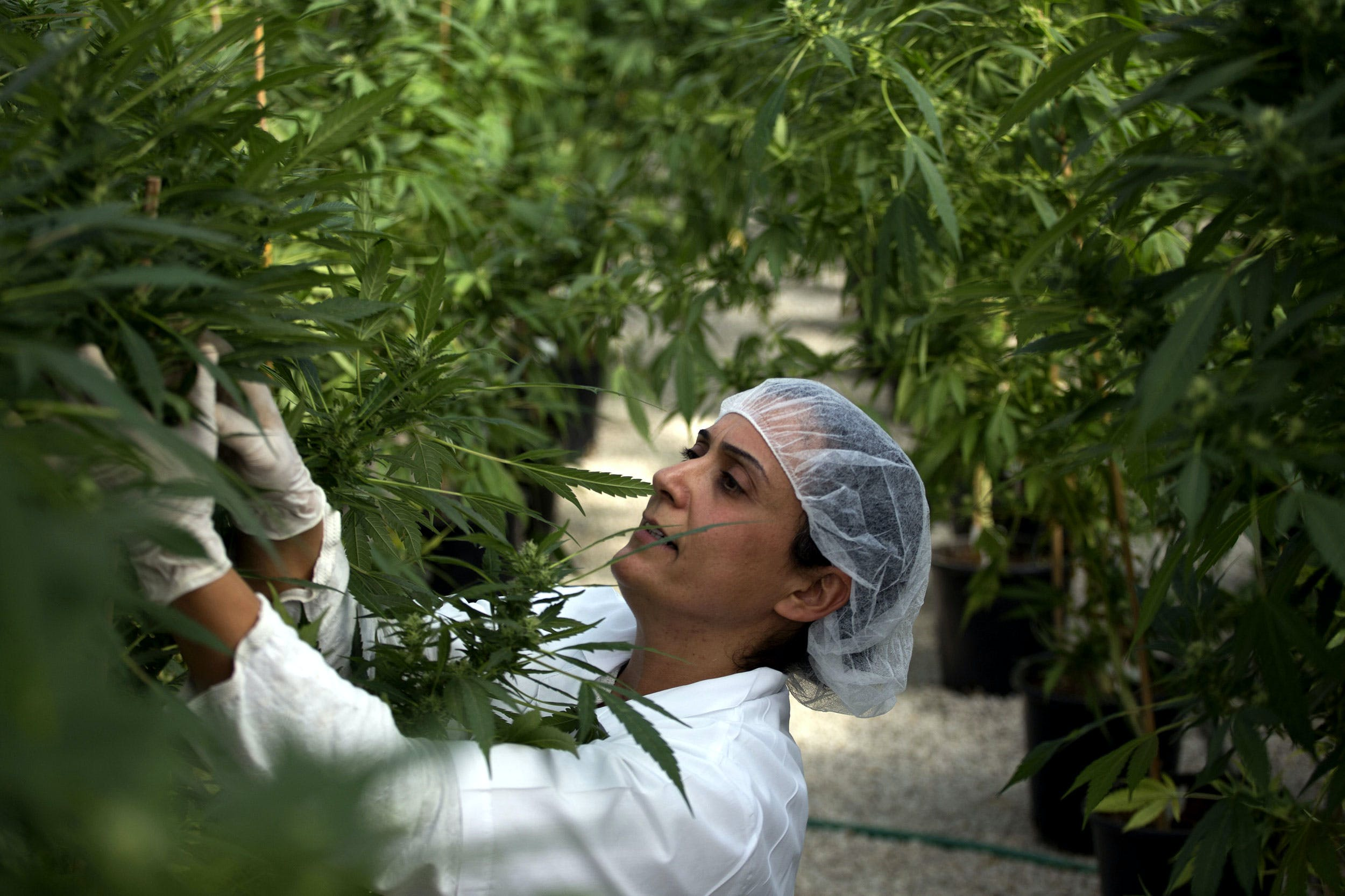 How Israelis and Palestinians Are Using Cannabis to Cope With Their Trauma 1 How Israelis and Palestinians Are Using Cannabis to Cope With Their Trauma