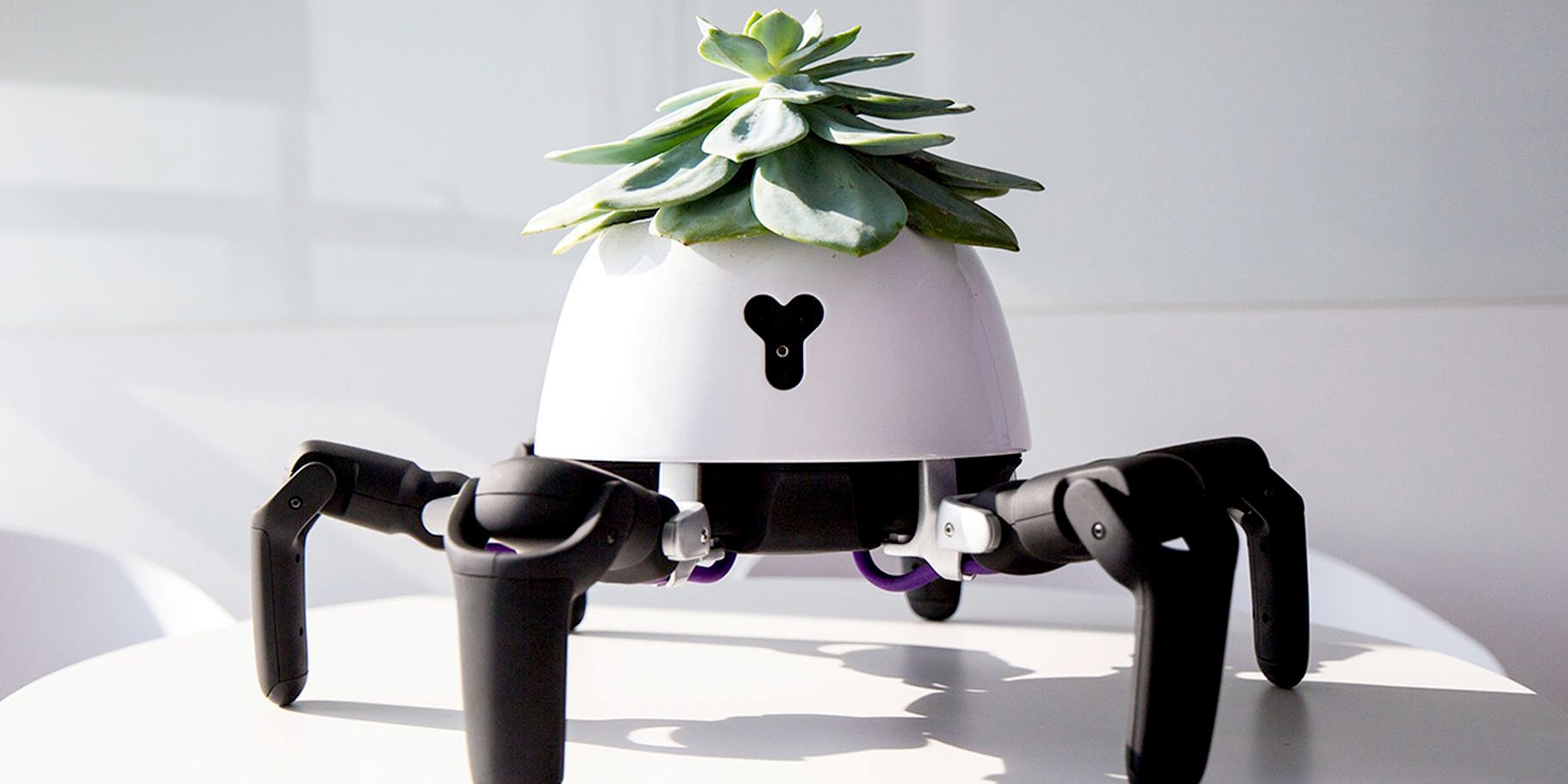 The World's Cutest Robot Will Move Your Plant In And Out Of The Sun