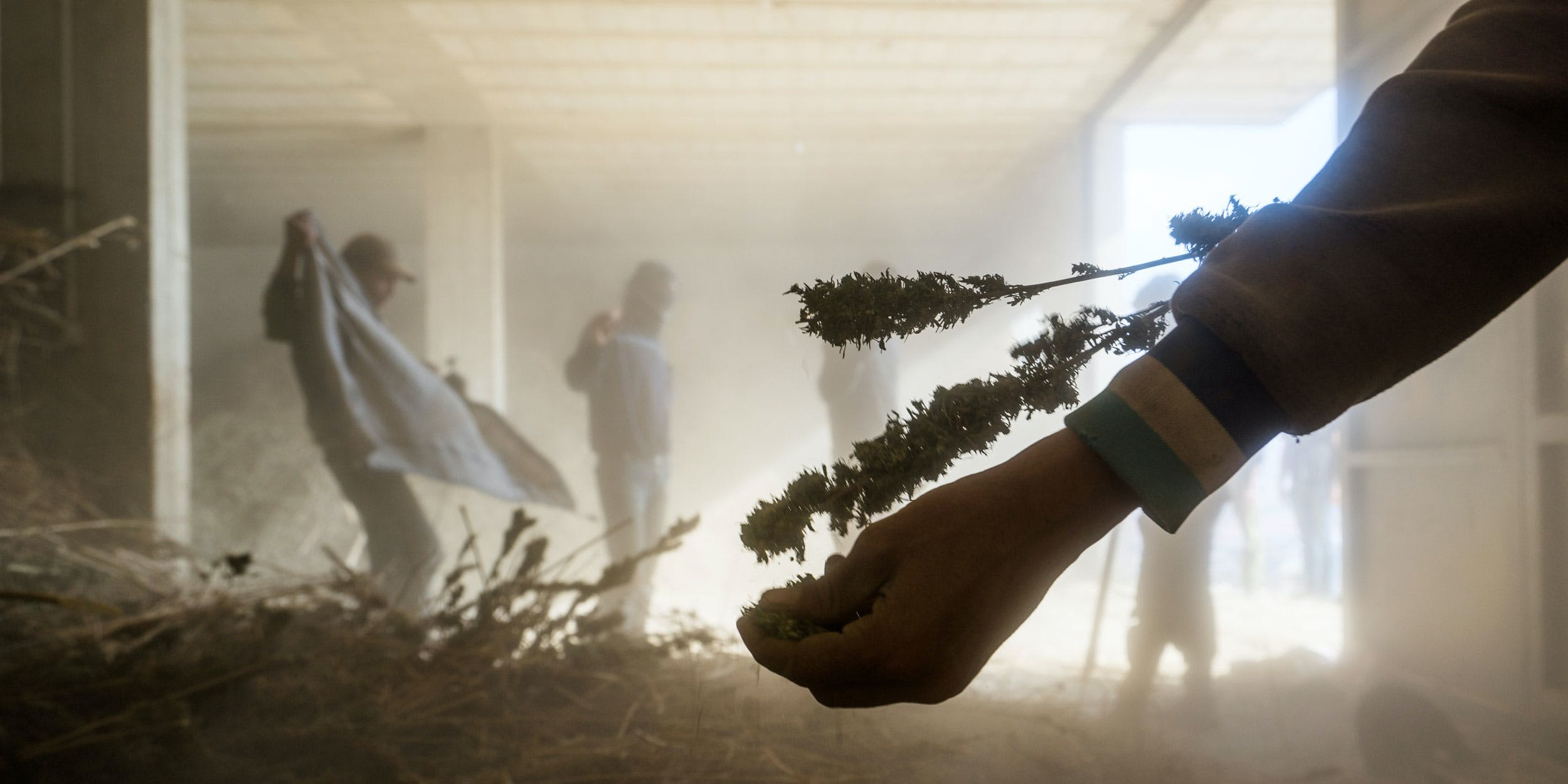 A marijuana processing warehouse in the Beqaa Valley in eastern Lebanon on November 1, 2015. Marijuana is grown openly in many areas of this 75 mile long valley and then processed into hashish in large warehouses during the cold winter months. The Syrian border runs the entire eastern length of the valley which over the the past two years has been a region of extreme tension and skirmishes as ISIS incursions increase into the small Lebanese border villages with most being protected by combined Hezbollah and Lebanese Army forces. Despite the massive military presence, the valley has always been one of the most fertile strips of land in the entire Middle East helped largely by the successful Litani hydroelectricity project that was completed in 1967 creating a web of canals that irrigate much of the valley. (Photo by Giles Clarke/Getty Images)