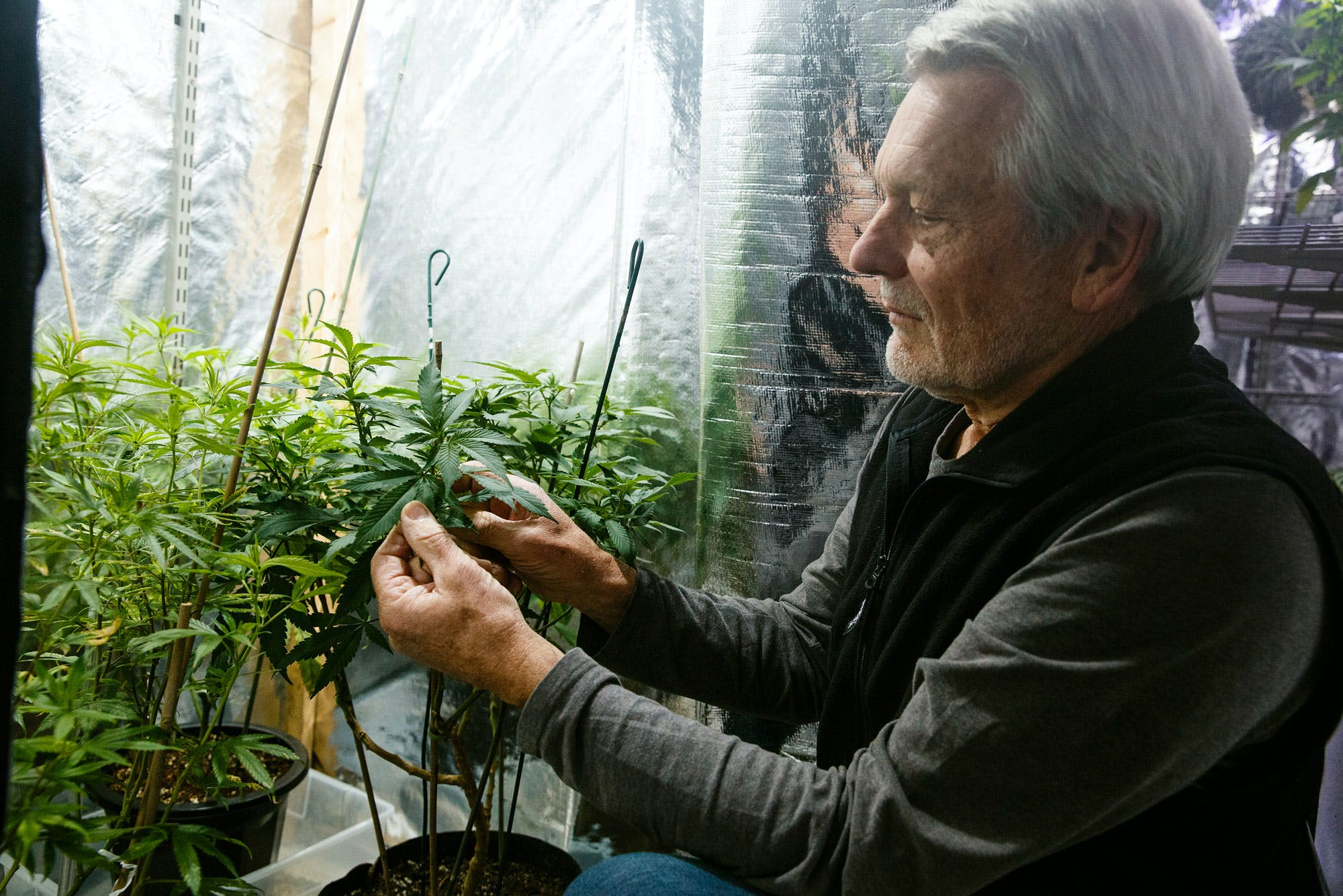 Marijuana is legal in Massachusetts but the feds are still looking to prosecute cases here in these three areas1 Cannabis is Legal in Vermont, But Gifting it Isnt