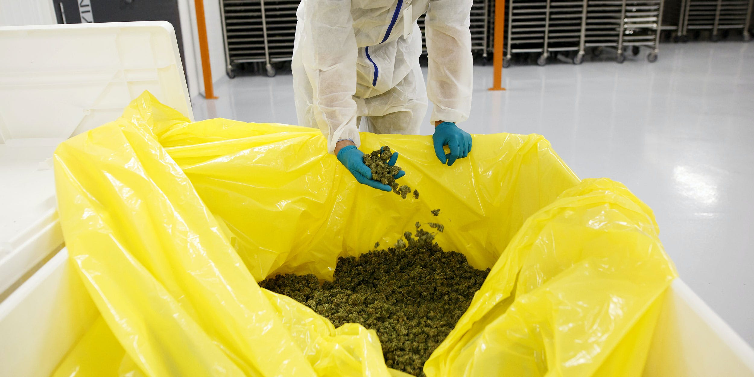 Michael Ravensdale, vice-president of production and quality at CannTrust Holdings Inc., inspects cannabis buds at the Niagara Perpetual Harvest facility in Pelham, Ontario, Canada, on Wednesday, July 11, 2018. Florida could soon be shutting down nearly half of the state's processing facilities because they failed to comply with a regulation they didn't know existed