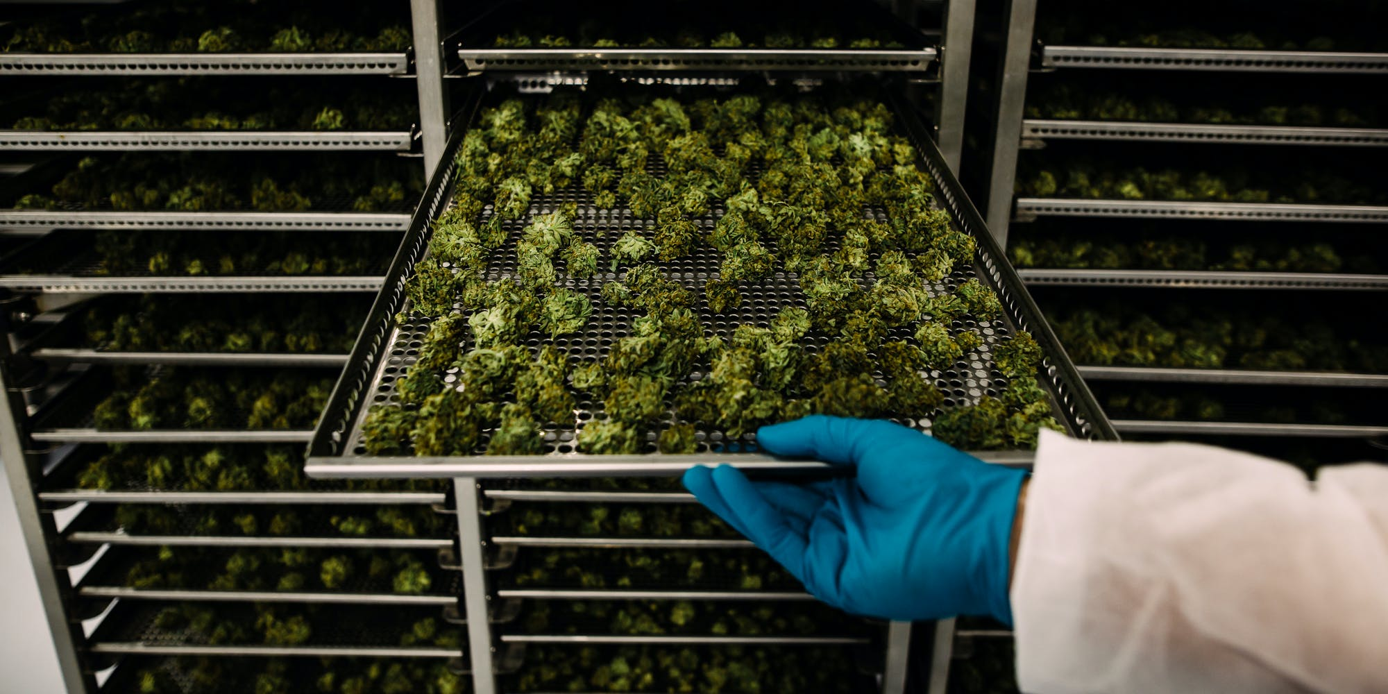 An employee pulls out a tray of drying cannabis buds at the CannTrust Holding Inc. Niagara Perpetual Harvest facility in Pelham, Ontario, Canada, on Wednesday, July 11, 2018. Nova Scotia just announced it'll be the first province in the country to open combined alcohol-cannabis retailers.
