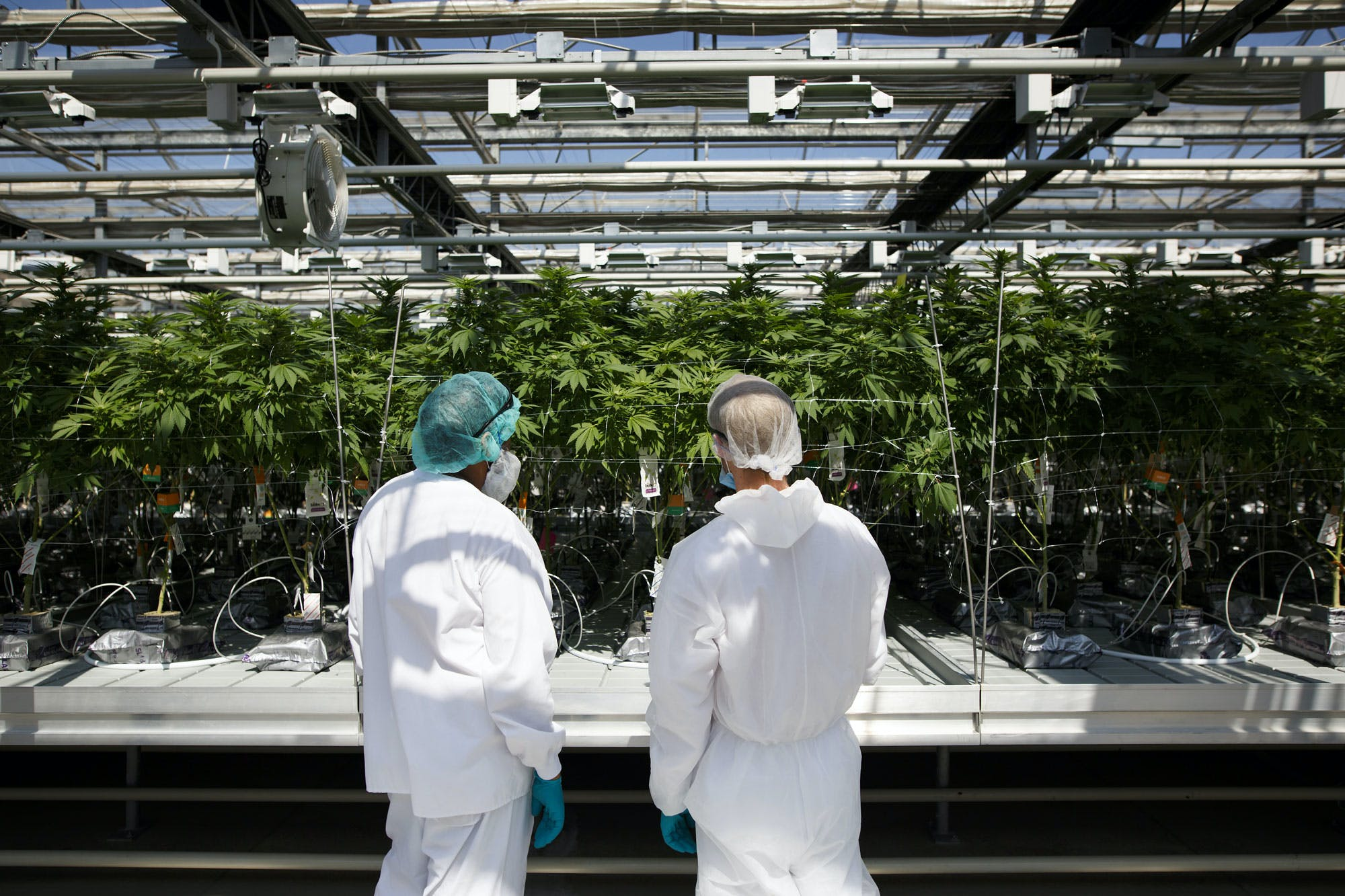 Will 31 licensed producers and 1 government store be enough to meet B.C.%E2%80%99s weed needs 1 Cannabis Consumers Would Rather Pay a Premium Than Buy Product From the Black Market: Study