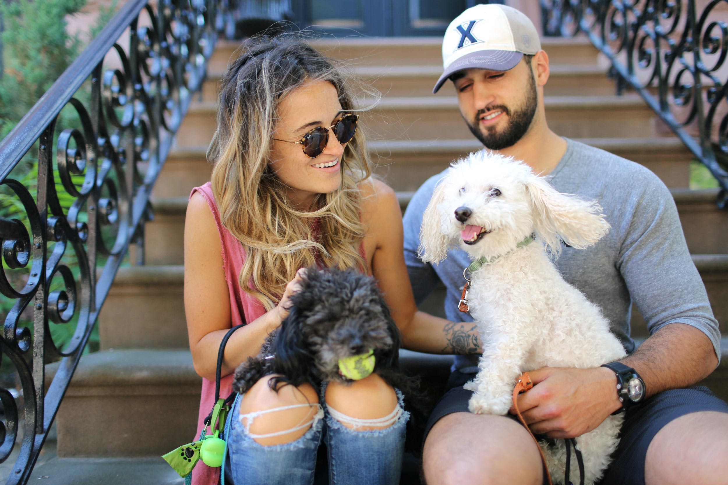 CBD for Dogs with Arthritis How My Old Poodle Became His Playful Self Again2 Cheech and Chong, the Cannabis Voter Project Want You to Vote This November