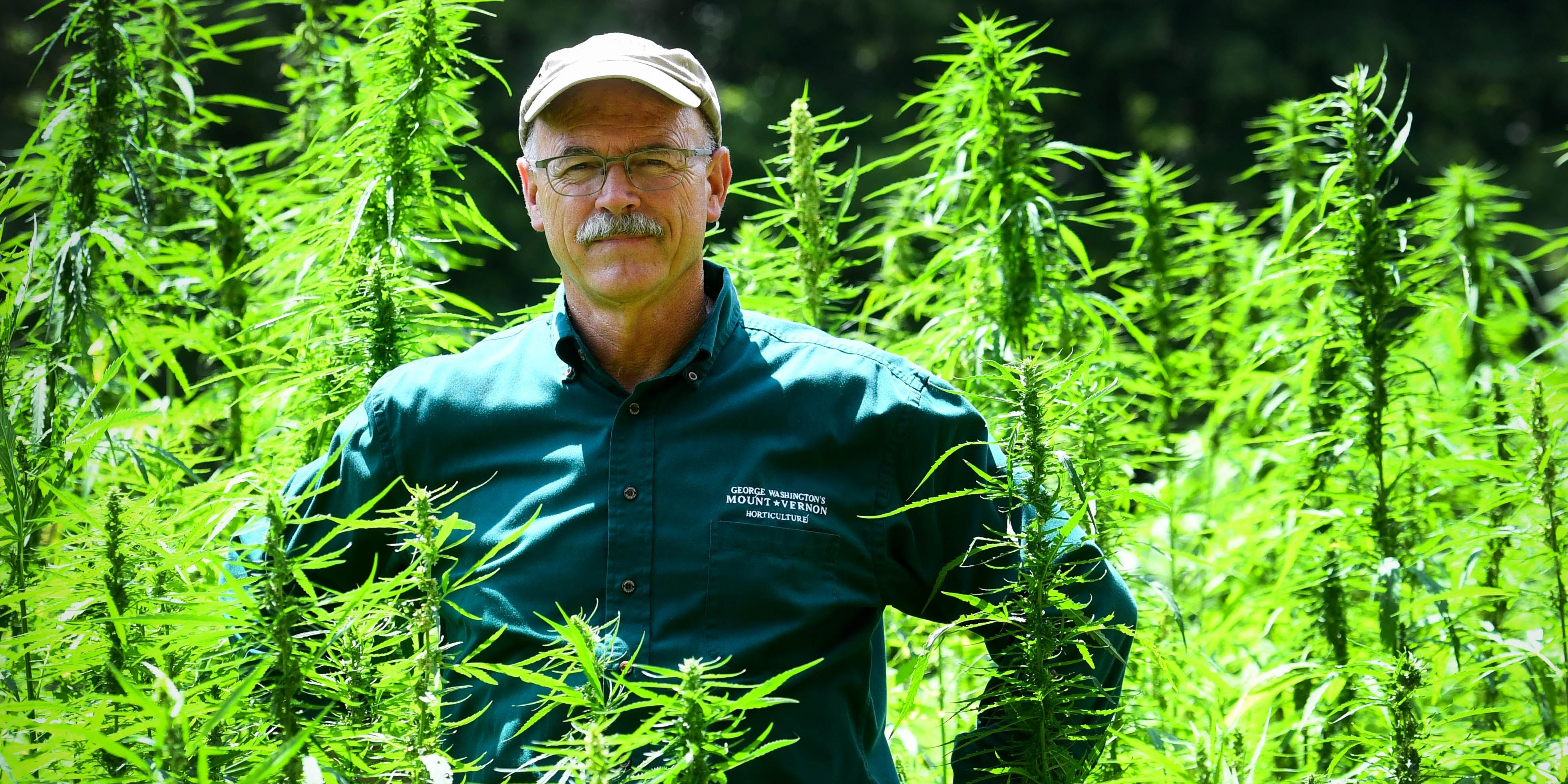 ALEXANDRIA, VA - JULY 26: Mount Vernon Director of Horticulture, Dean Norton, talks about the estate's newest crop, hemp, as he stands amid the budding plants on July 26, 2018 in Alexandria, VA. (Photo by Katherine Frey/The Washington Post via Getty Images)