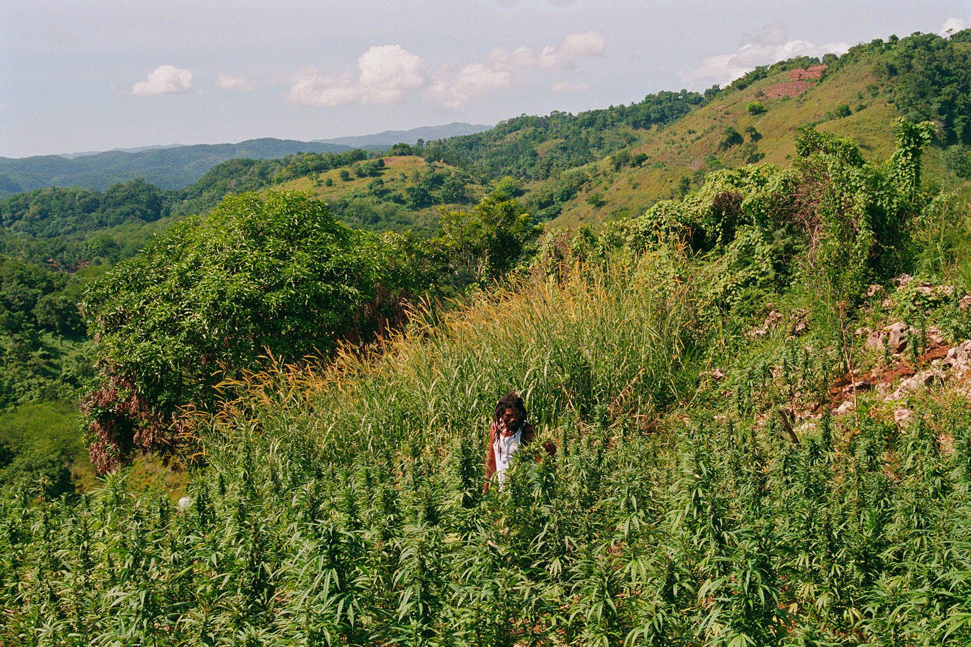 The Five Countries Most Likely To Legalize Cannabis Next1 The 5 Countries Most Likely to Legalize Cannabis Next