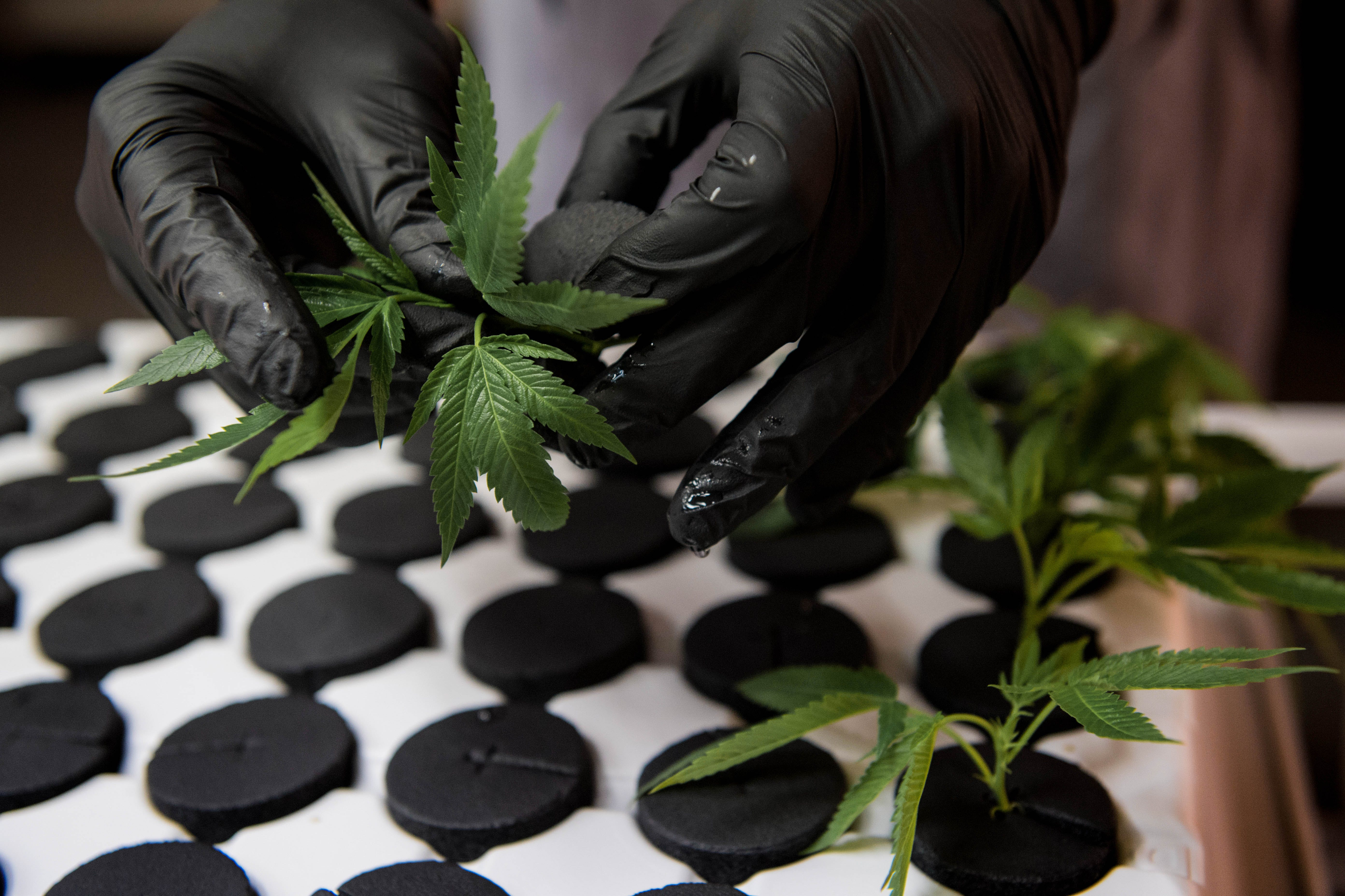 This Company Wants to Spray Cannabis With DNA Tracking Markers7 This Company Wants to Spray Cannabis With DNA Tracking Markers
