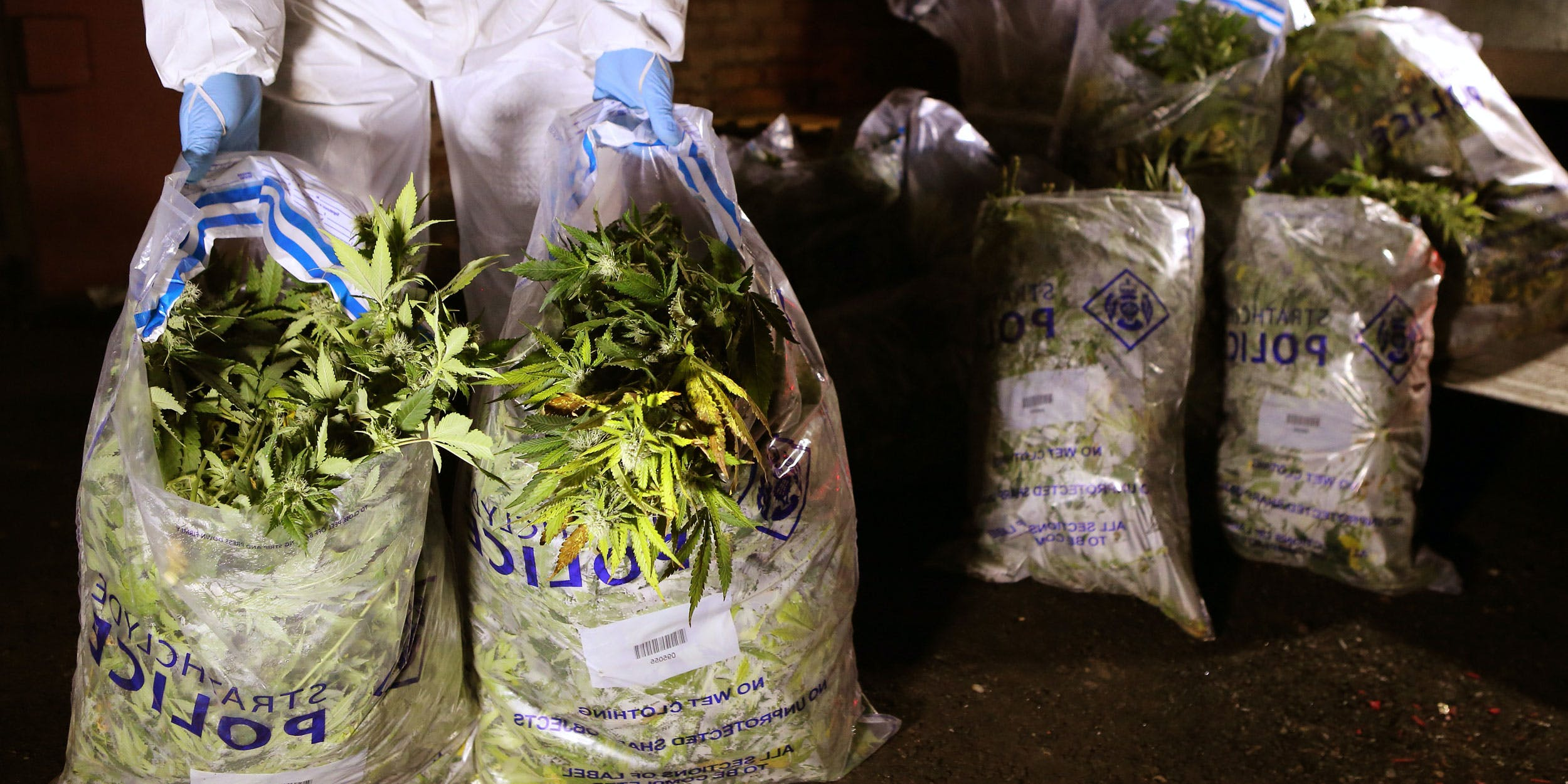 Strathclyde Police officers in Scotland load drugs in bags believed to be cannabis after it was found at a commercial premise in Rutherglen after a drugs raid. The police in London recently announced that they discover illegal cannabis grows in the UK's capital every two days.