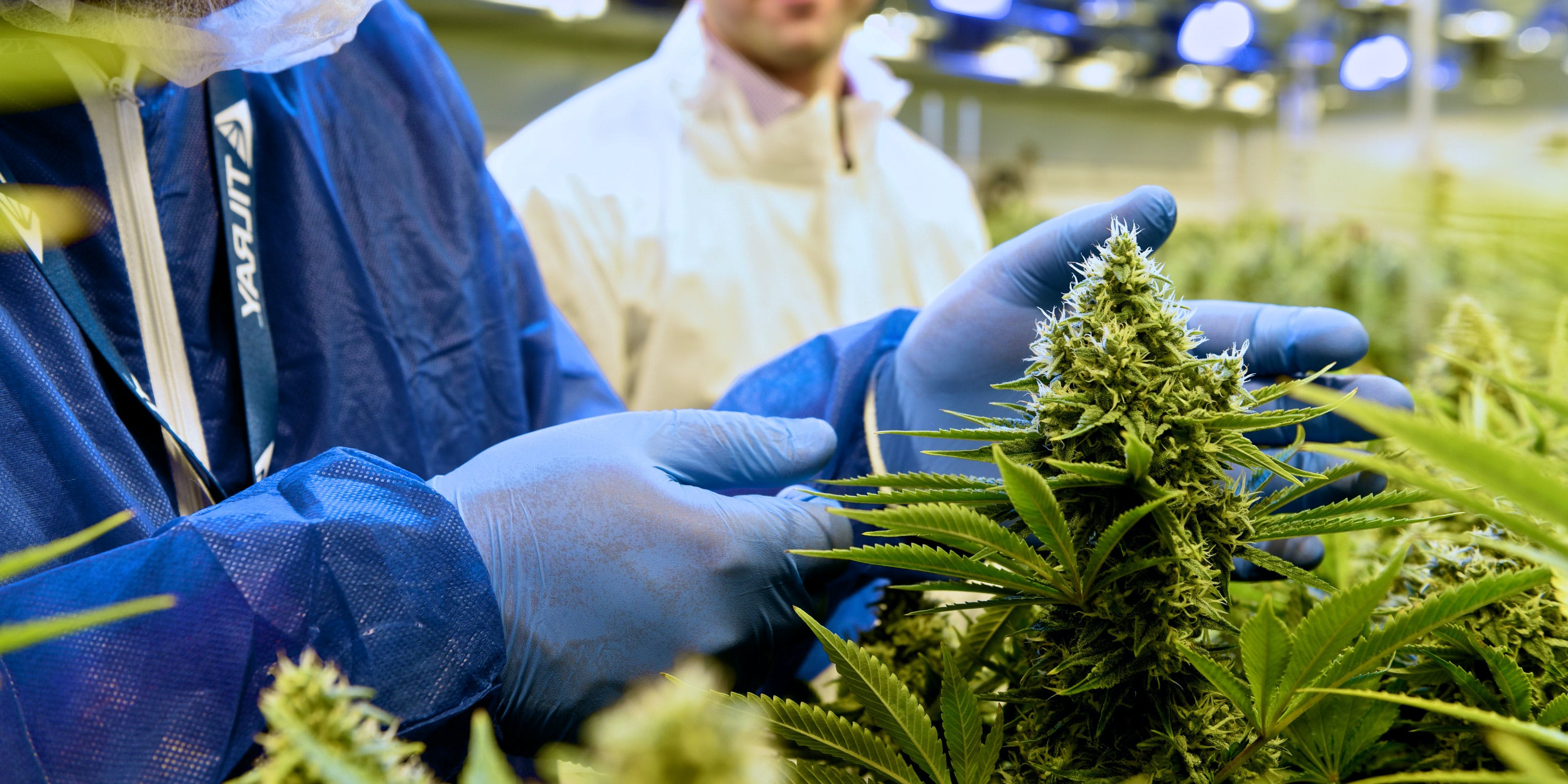 Tilray employees inspecting cannabis plants at the Tilray Facility. Tilray received approval from the DEA to send cannabis for research to the U.S.