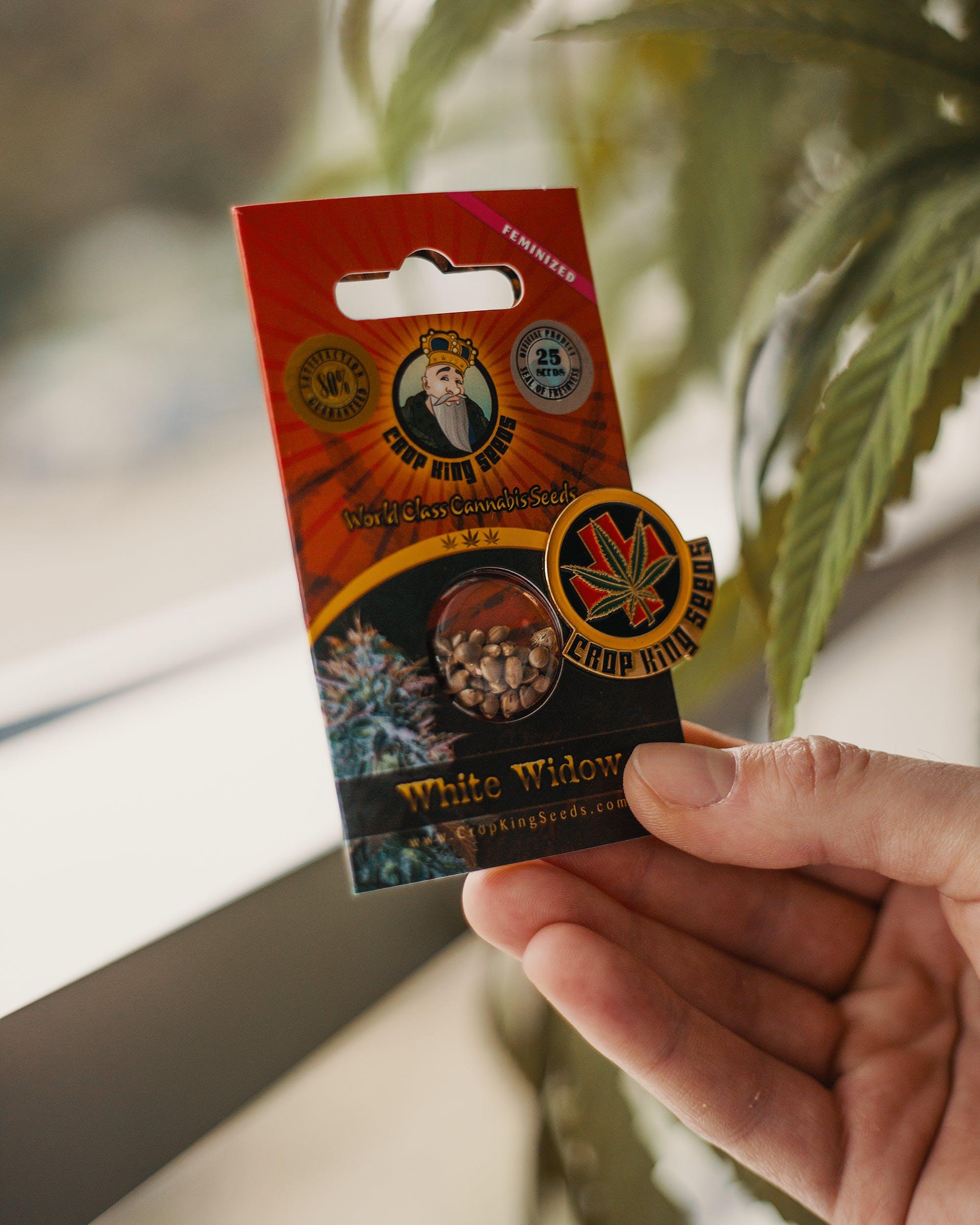 Marijuana Seeds 71 How to Buy Marijuana Seeds That Will Yield Perfect Bud