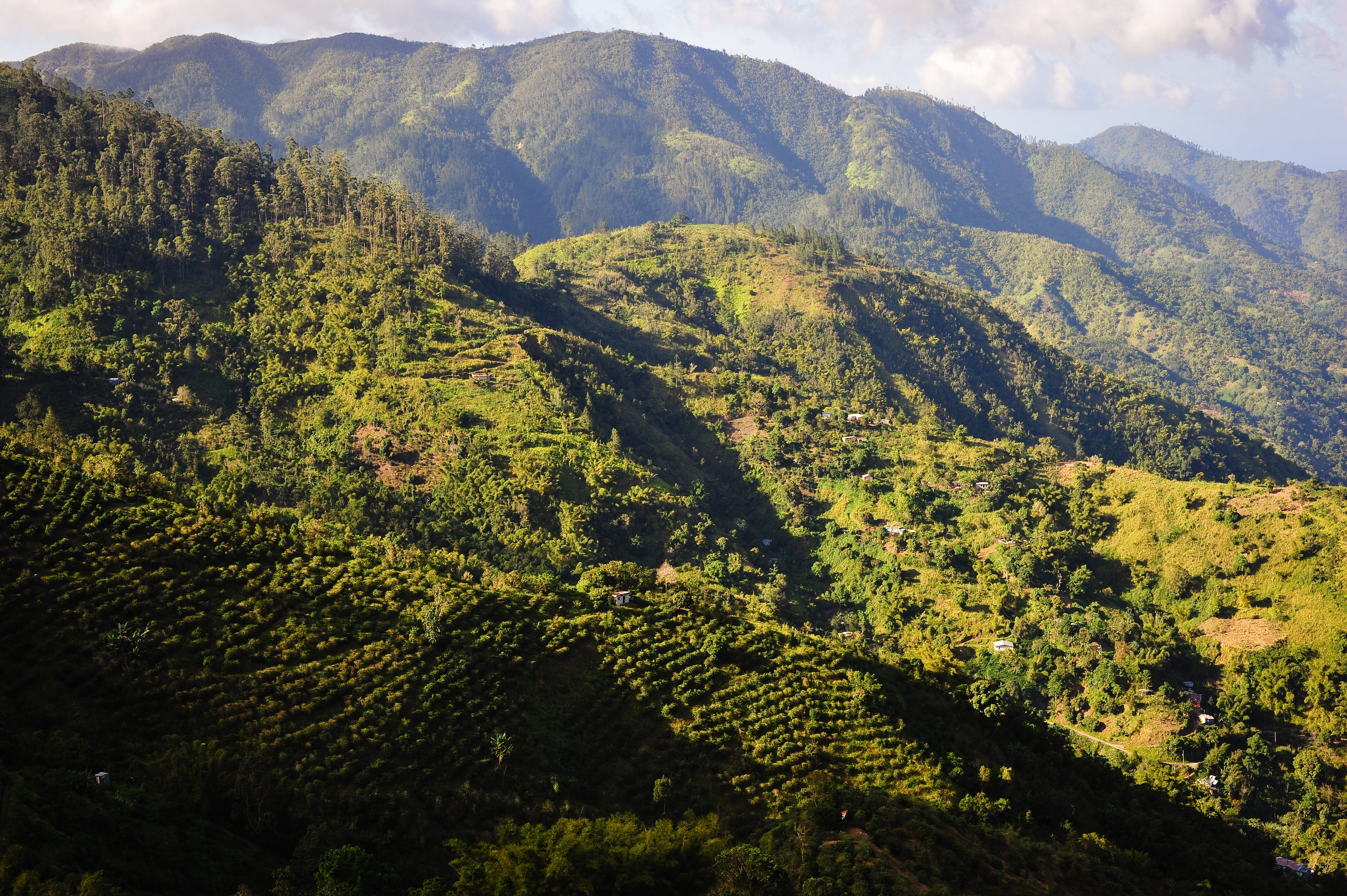 A view of the rugged Blue Mountains of Jamaica at sunset. Scientists are on a Question to Find and Preserve Jamaica's Unique Strains (Photo by Marc Guitard)