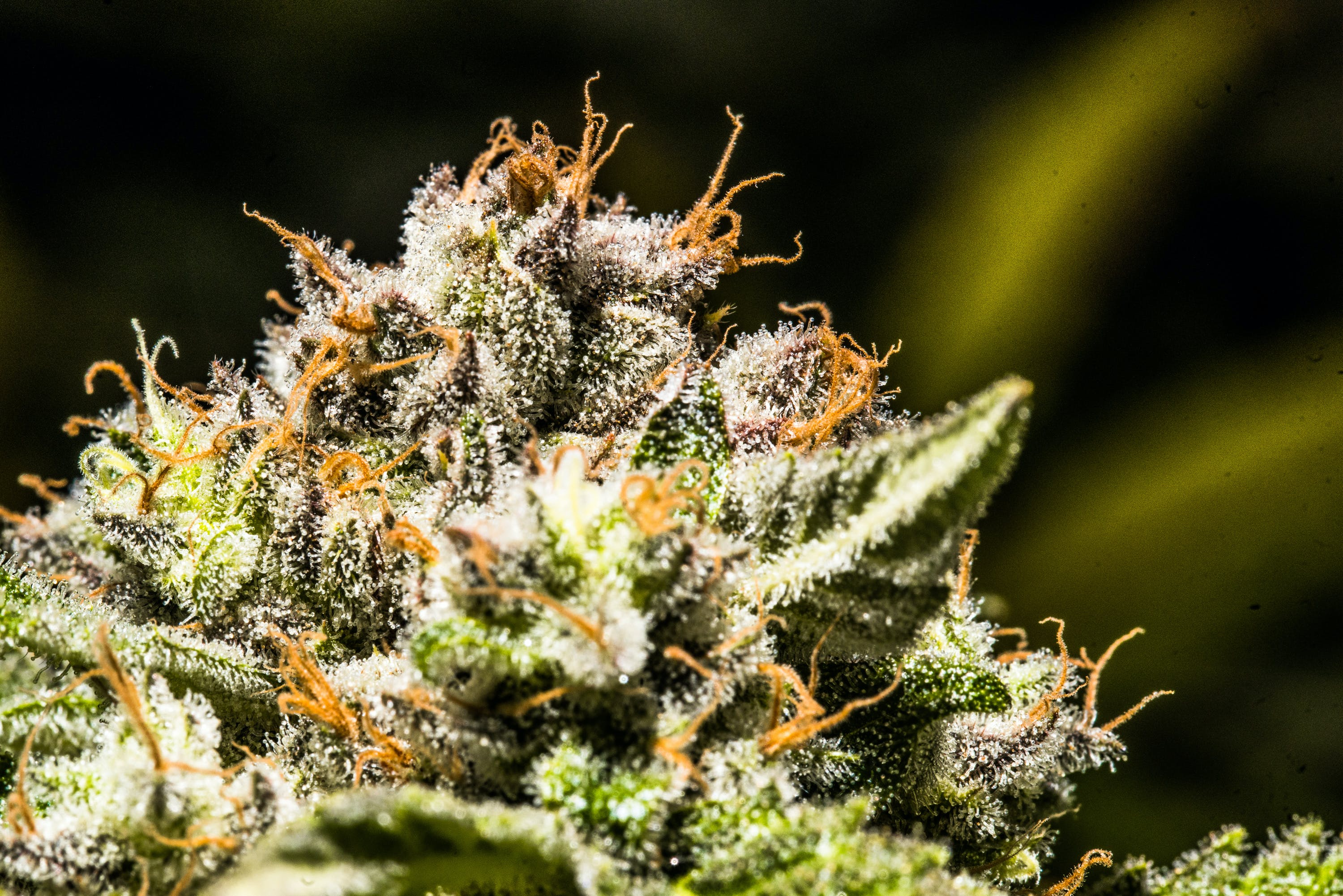 Supreme Op Ed 16 How to Get the Most Out Of Your Stash with the Best Weed Grinders