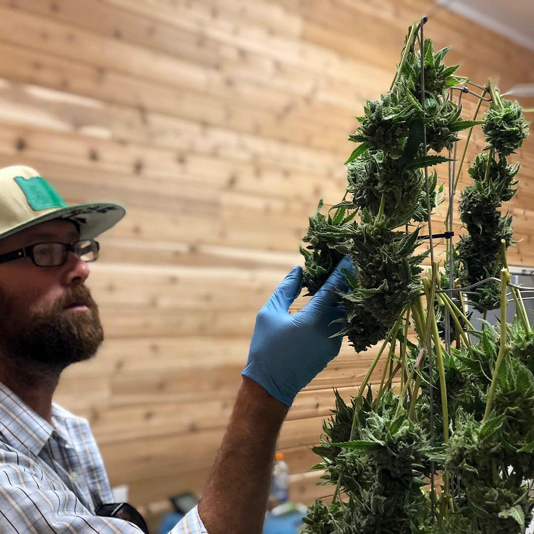 Will Oregon Be The First State to Allow Weed Shipments Across State Lines 1 The Top 5 Cannabis Strains for Hangover Symptoms