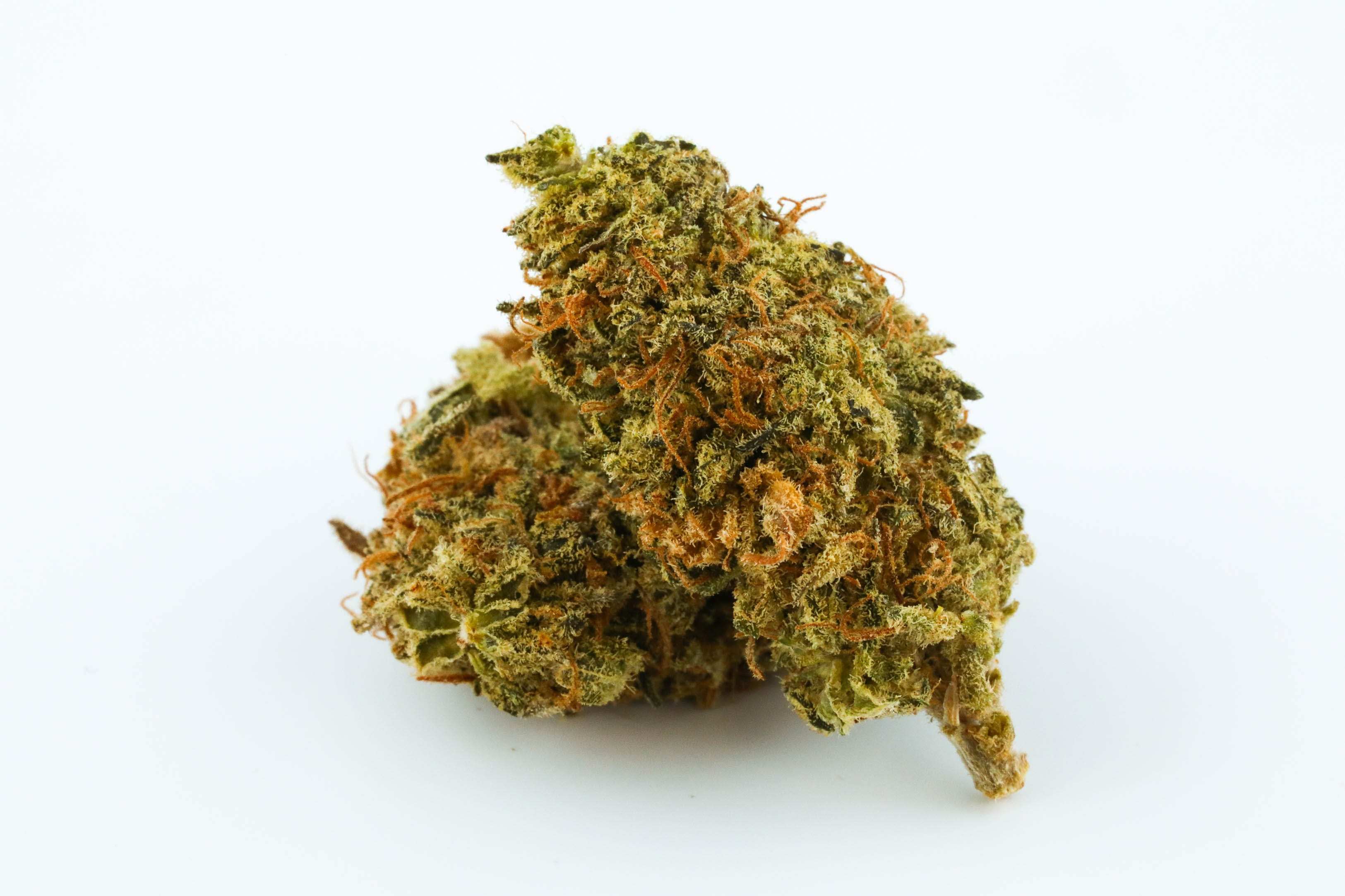 0G8A2709 10 Best Strains For Halloween