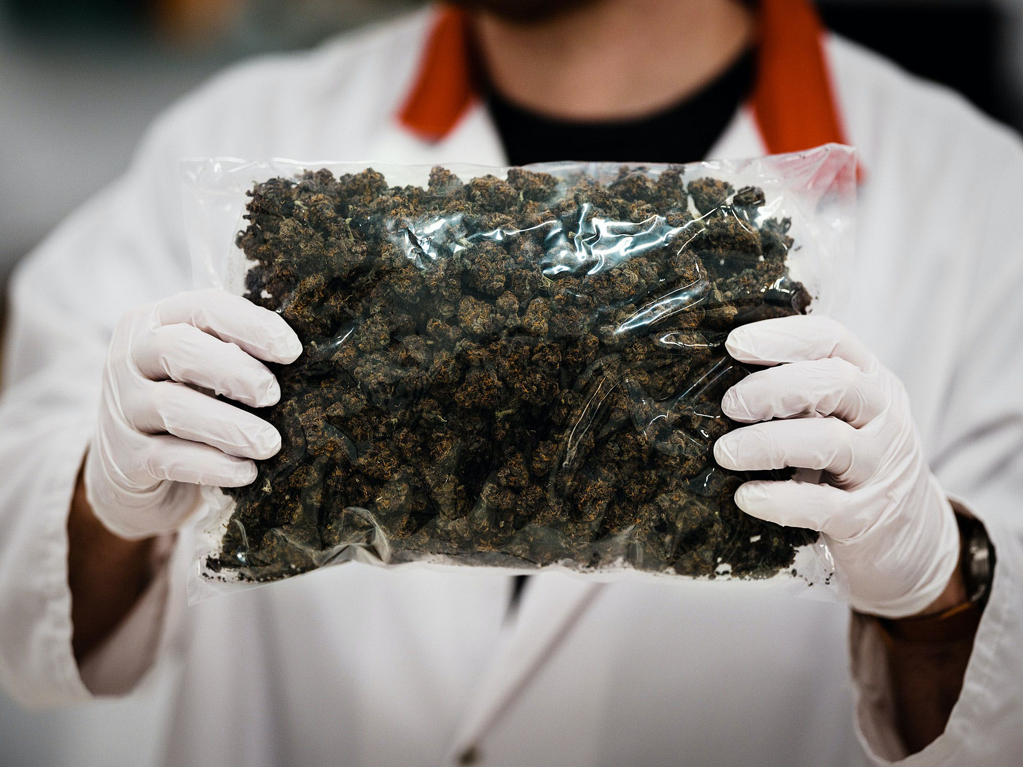 An employee at Green Relief holds up a bag of cannabis at the Green Relief laboratories in Hamilton, Ontario. Canada doesn't have enough weed for legalization day—even though it's just around the corner.