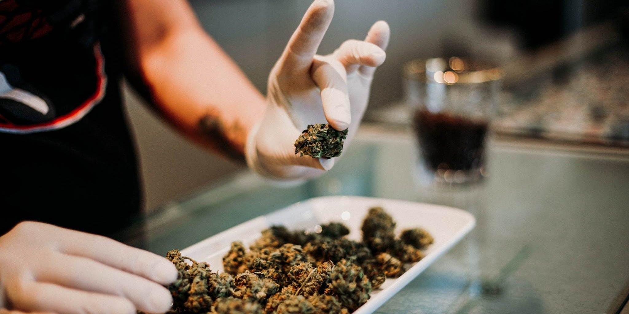 In this article, we feature the best dispensaries in BC. Here a budtender is shown holding a nug
