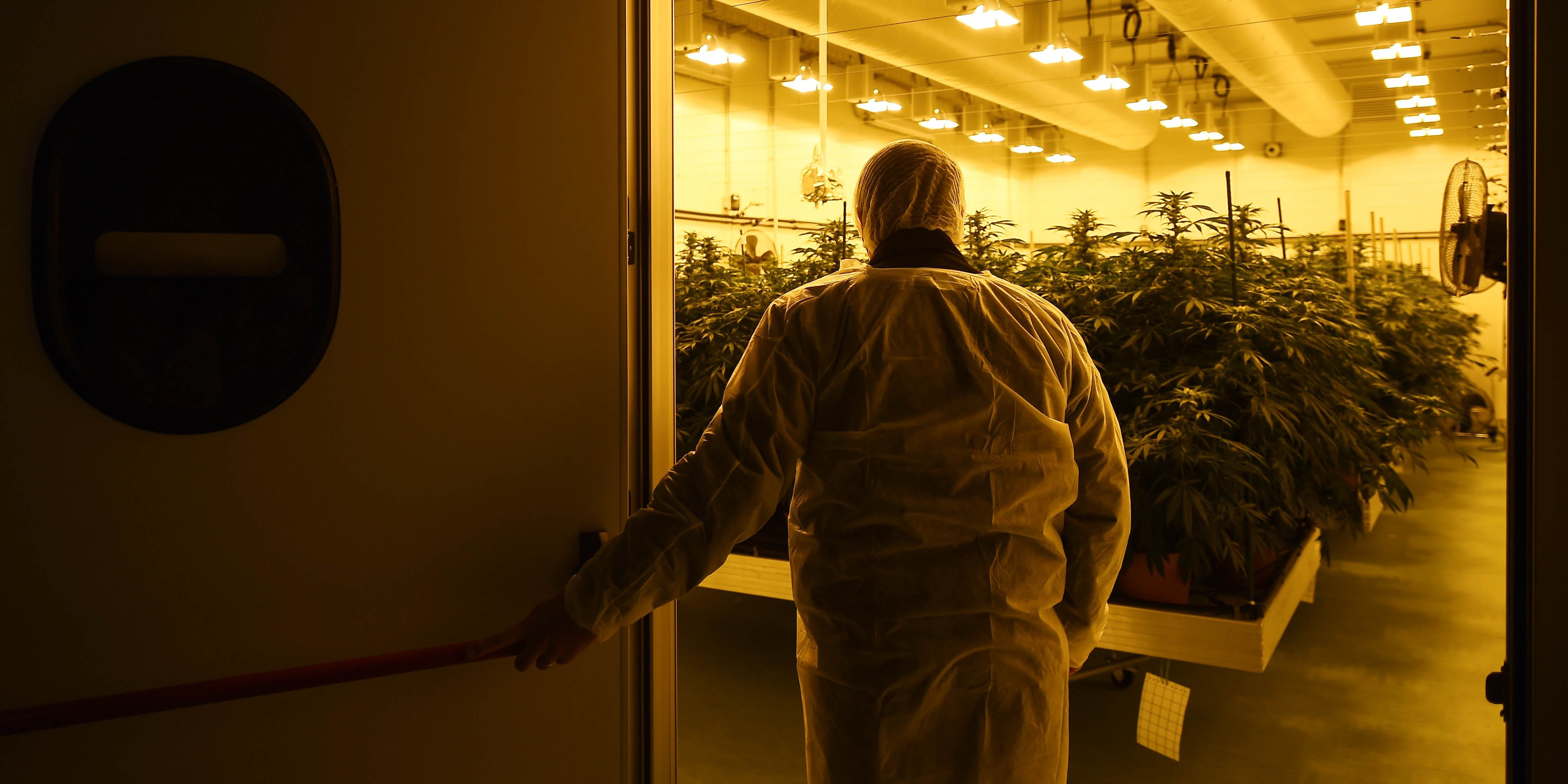 Modern Day Weed vs. Hippie Weed: Is Weed Getting Stronger? Here, a man is shown entering a grow room