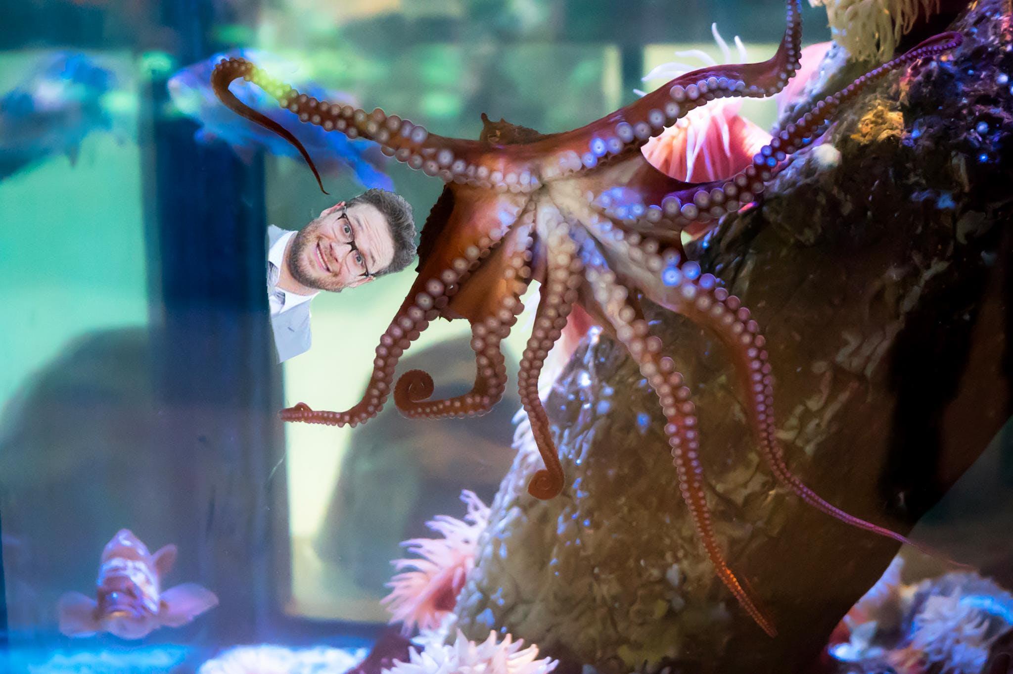 45832656 10155613310515800 5899435291009089536 o Vancouver Aquarium Names a Giant Octopus After Seth Rogen