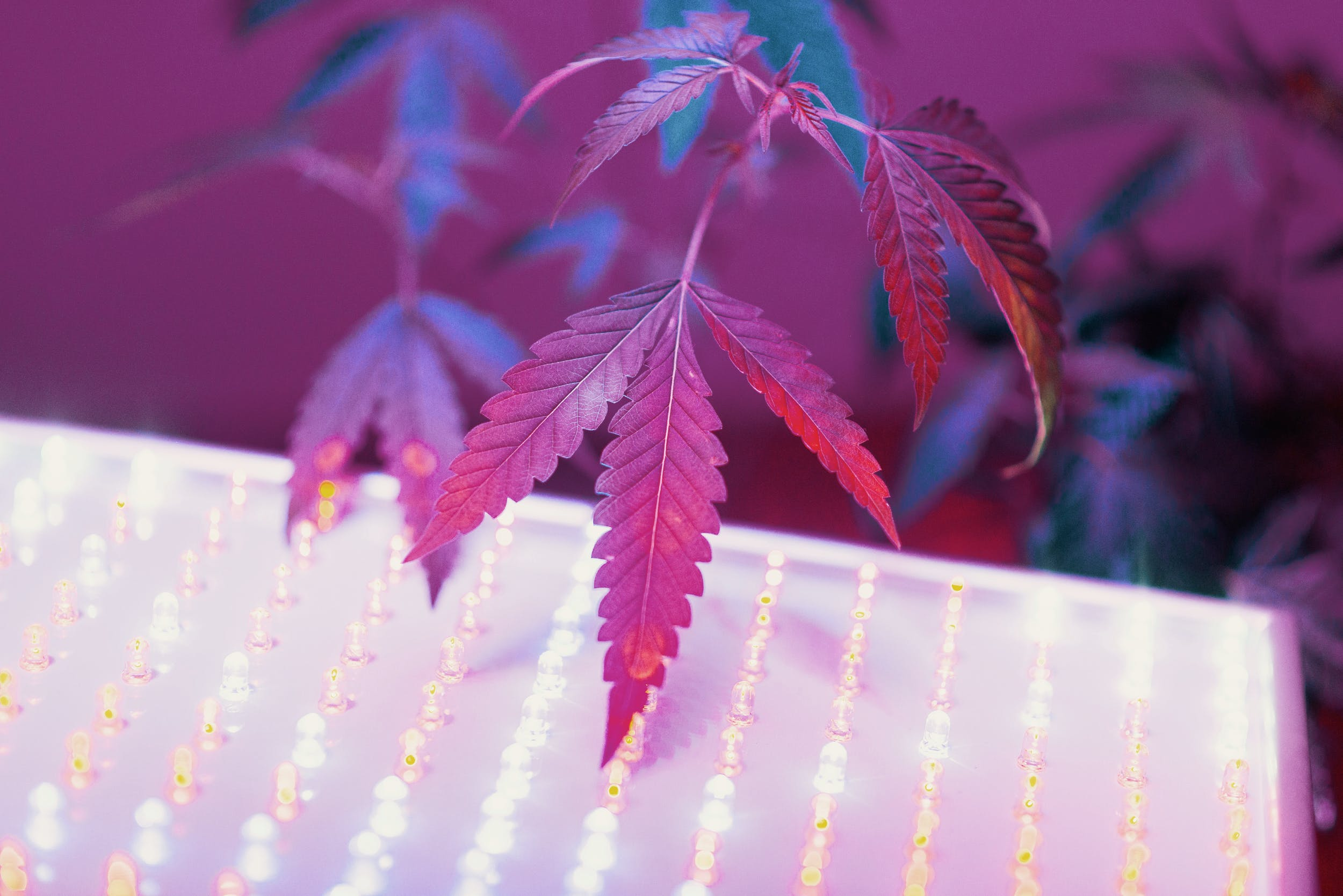 Best LED Grow Lights 31 These Are The Best LED Grow Lights For Big Yields and Healthy Plants