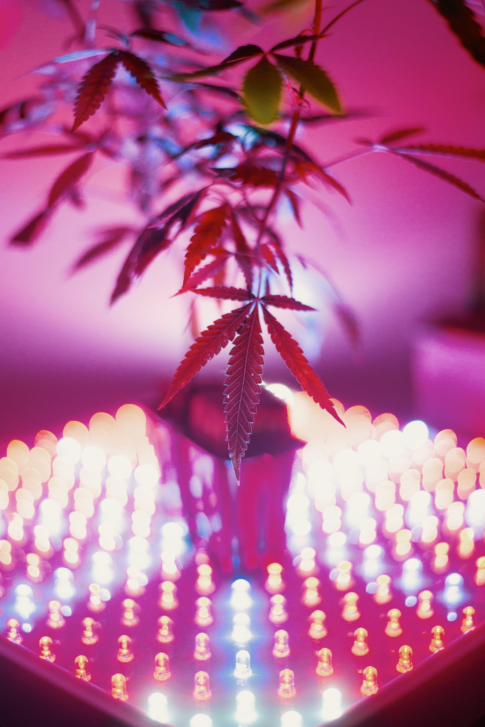 Best LED Grow Lights 8 These Are The Best LED Grow Lights For Big Yields and Healthy Plants