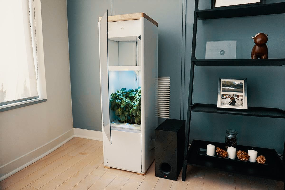 In this article, we cover what's makes for the best grow box for beginners. Here, a grow box is shown in someone's home