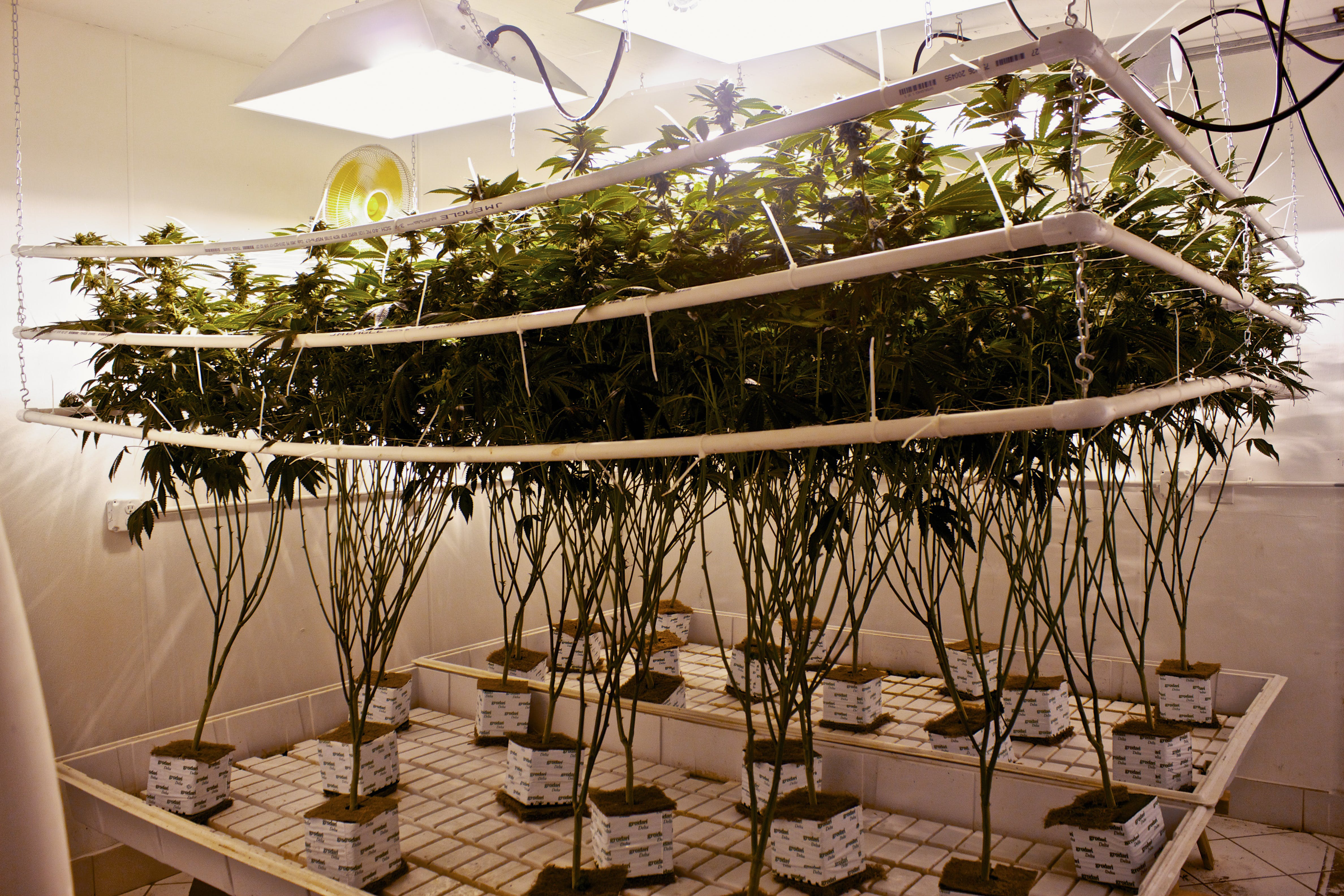 What is Hydroponic Weed? Here, a hydroponic system is shown