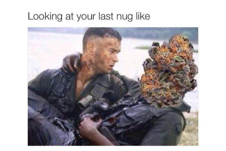 The 100 Best Weed Memes For True Herb Enthusiasts47 The 100 Best Weed Memes For True Herb Enthusiasts