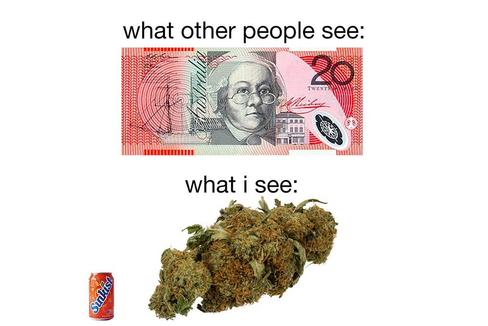 The 100 Best Weed Memes For True Herb Enthusiasts52 The 96 Best Weed Memes For True Herb Enthusiasts