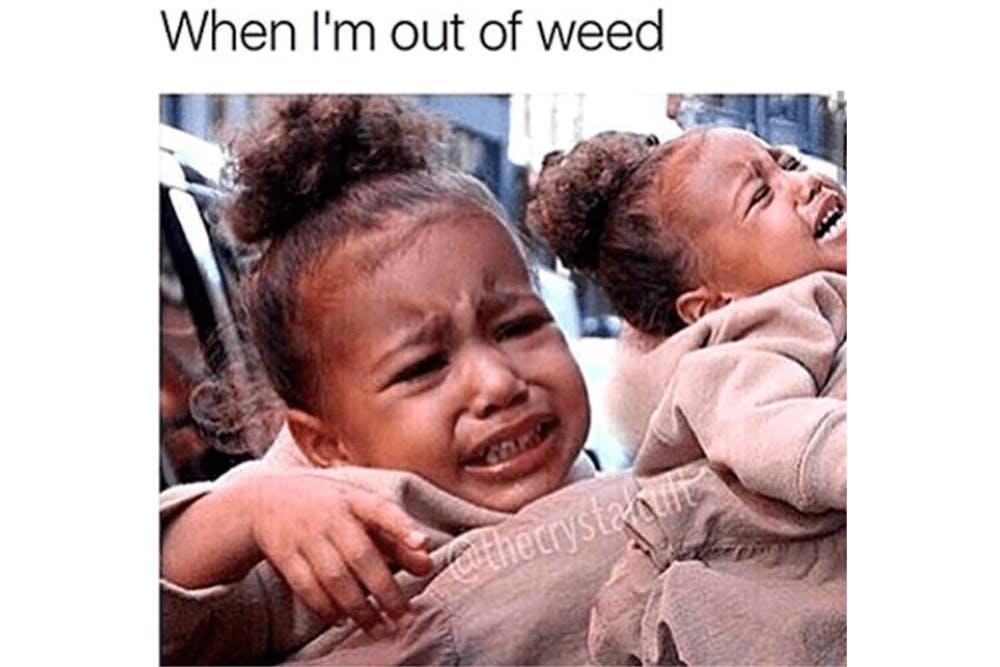 The 100 Best Weed Memes For True Herb Enthusiasts63 The 96 Best Weed Memes For True Herb Enthusiasts