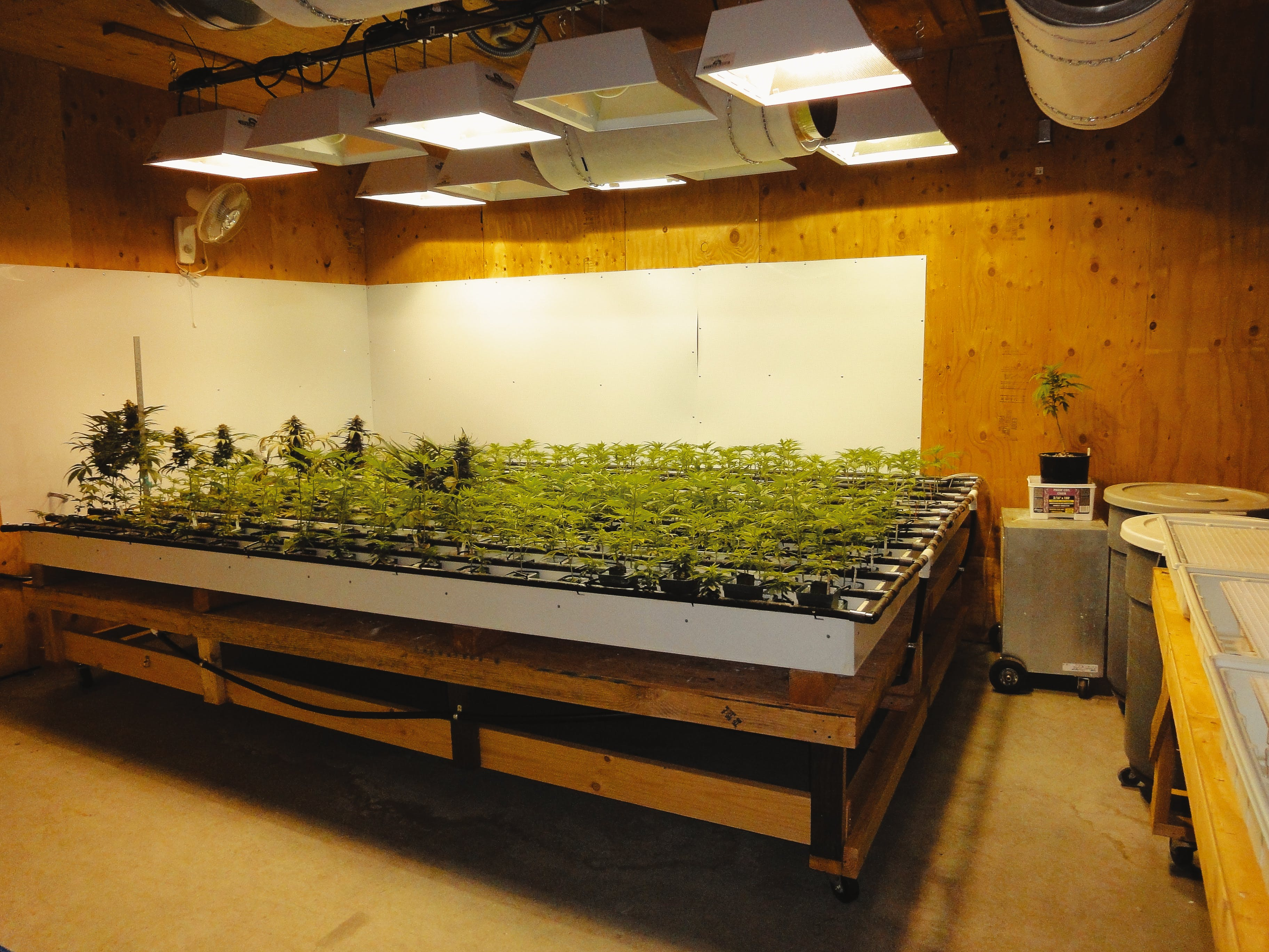 What is Hydroponic Weed The Pros and Cons of Hydroponics vs. Soil41 What is Hydroponic Weed? The Pros and Cons of Hydroponics vs. Soil