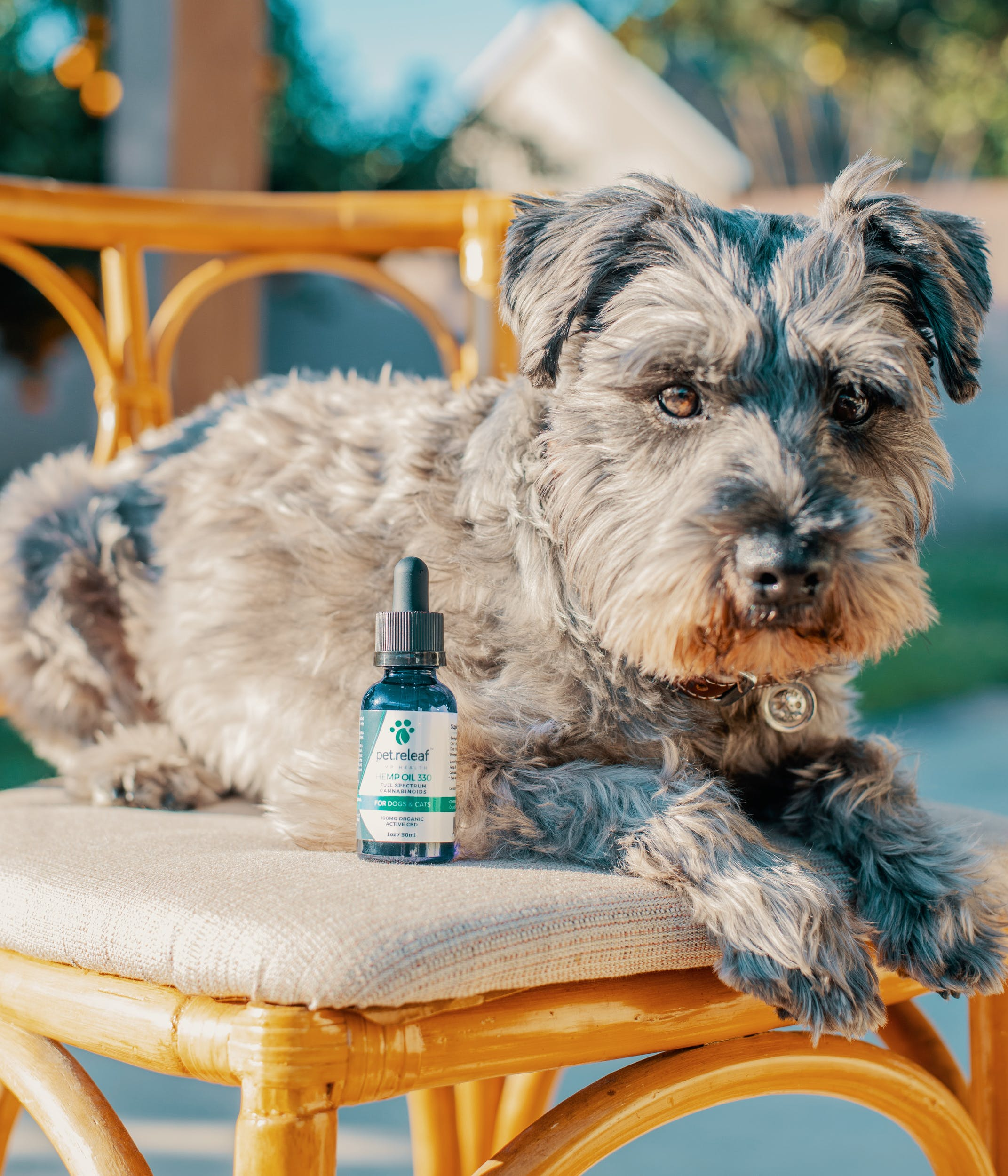 Best CBD Oil For Dogs 48 This Is The Best Hemp Oil For Dogs To Help Manage Anxiety, Seizures and More