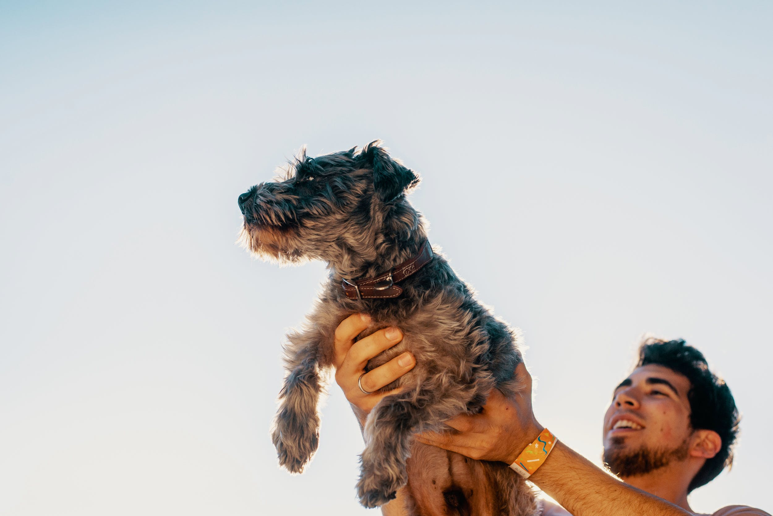 Best CBD Oil For Dogs 57 Martha Stewart Joins Forces with Canopy Growth to Develop CBD Pet Products