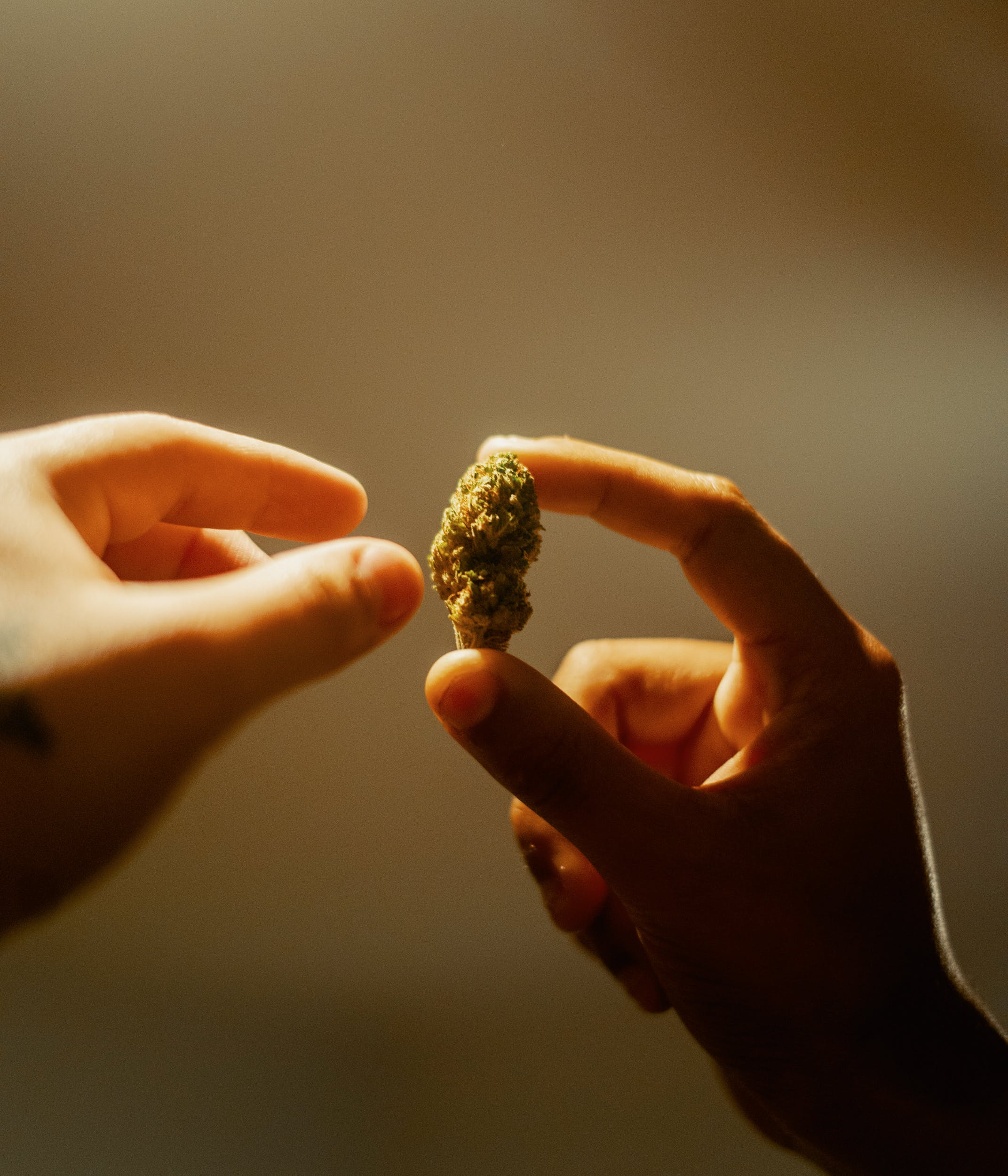 Best CBD Strains 46 Here Are The Best CBD Strains For a Chilled Out Session