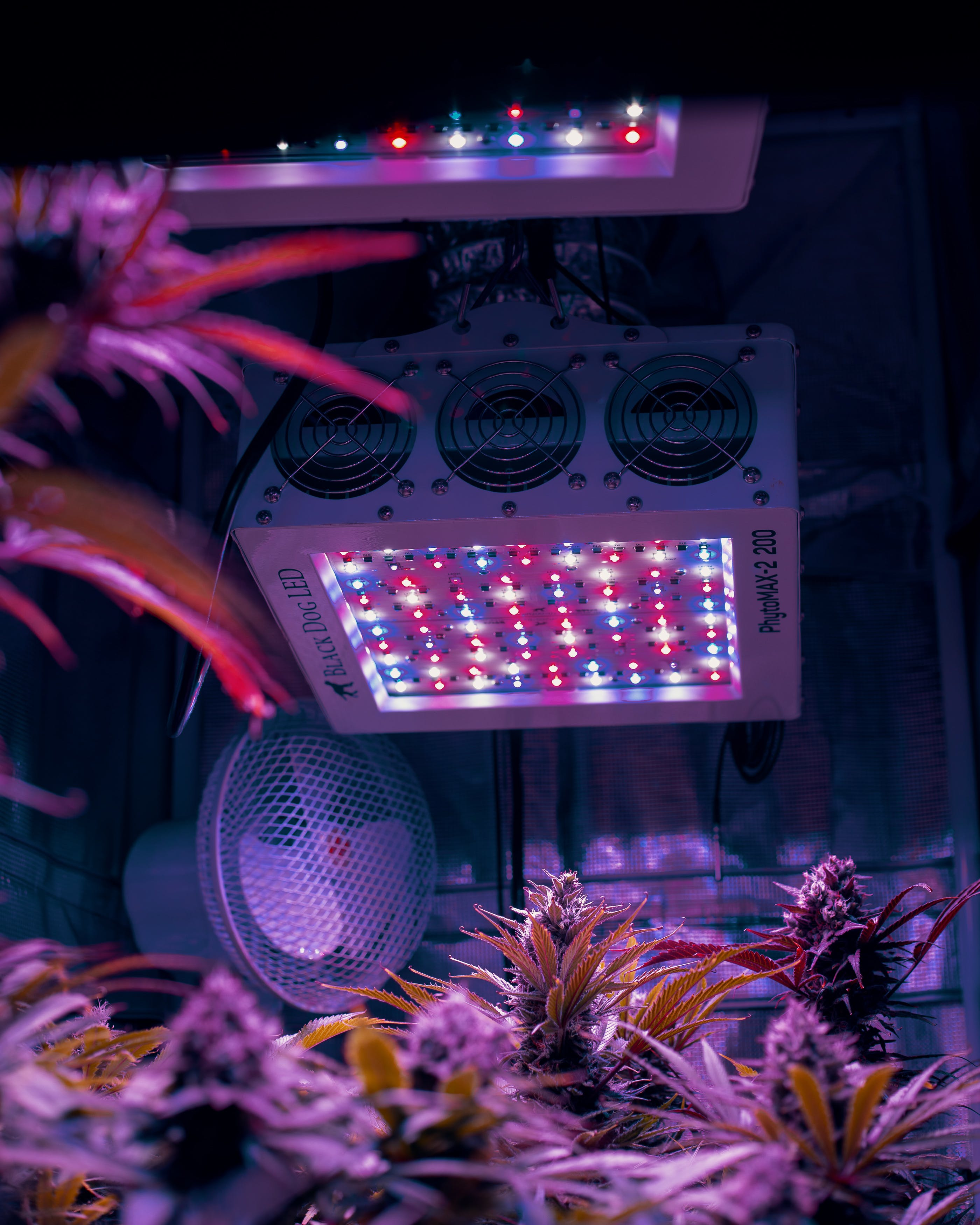 Everything You Need To Know About Grow Lights1 Everything You Need To Know About Grow Lights
