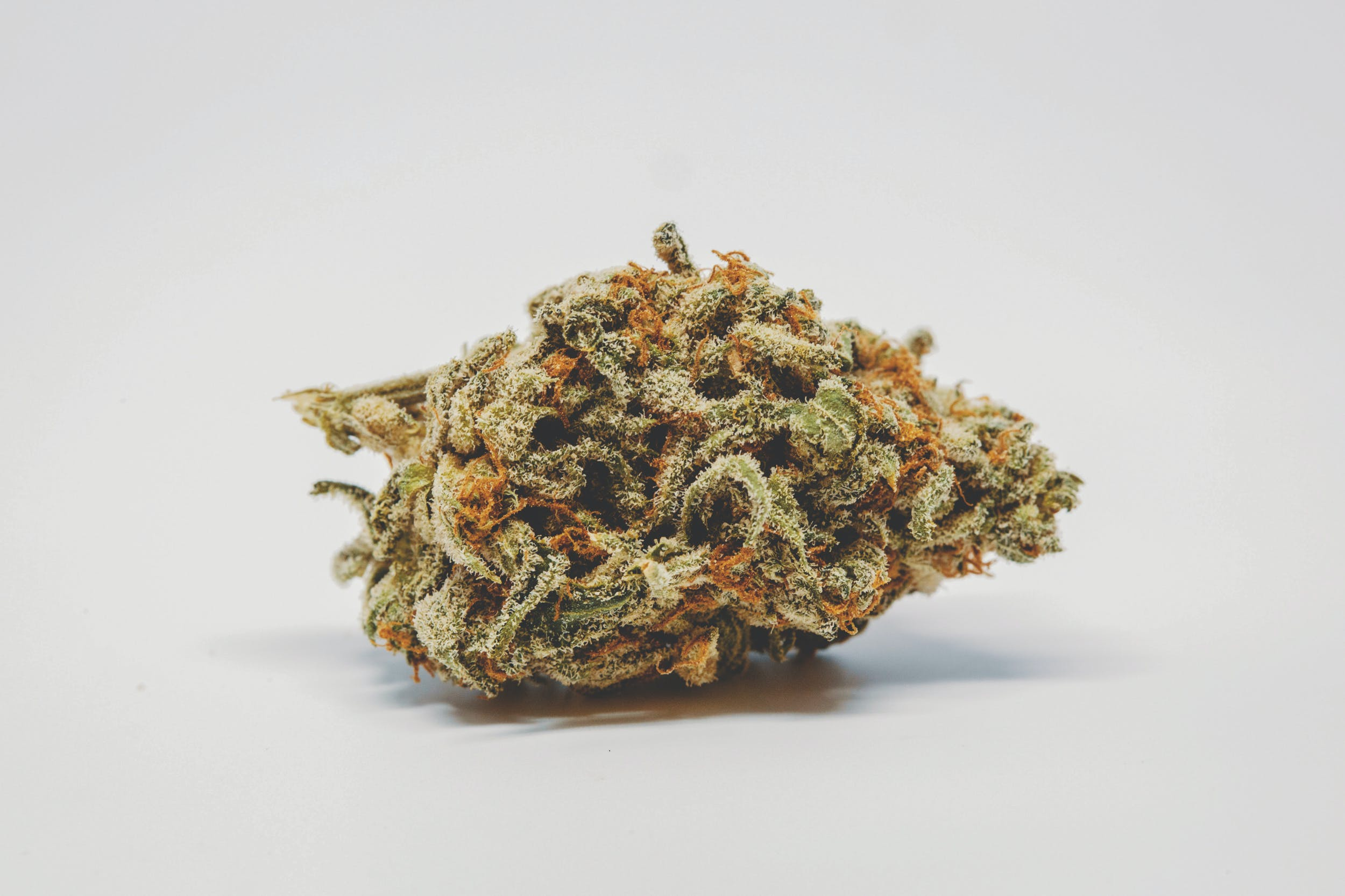 Allevi8 Chocolope 23 These are the Best Weed Strains in the World