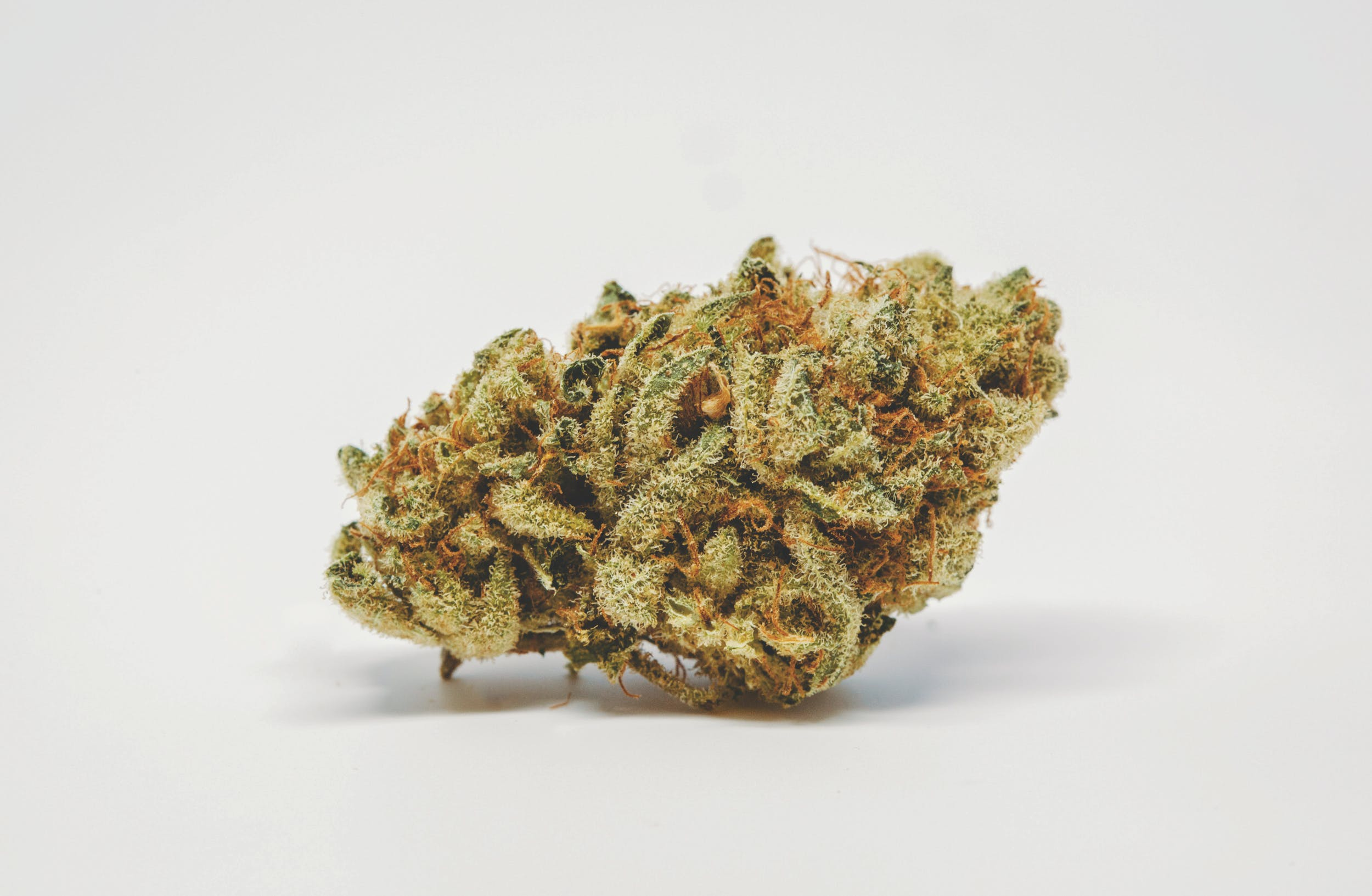 Best Kush Strains 2 These are the Best Kush Strains on the Planet