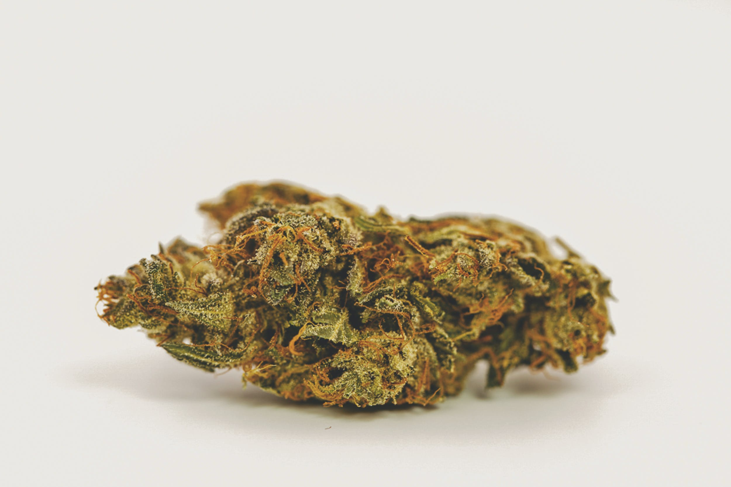 Best Kush Strains 6 These are the Best Kush Strains on the Planet